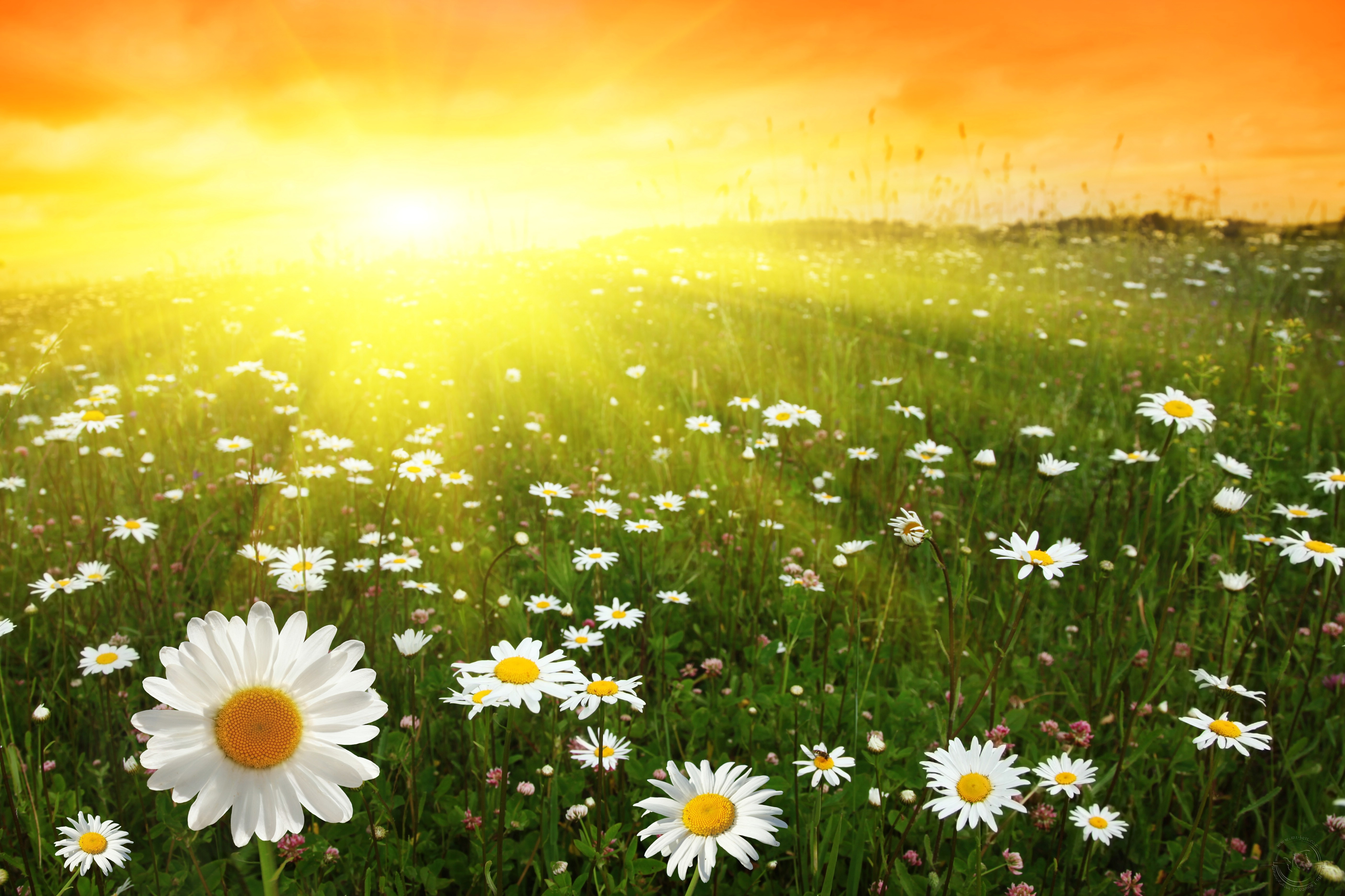 Flower Symbolism with Pictures of Flowers and Their Meanings