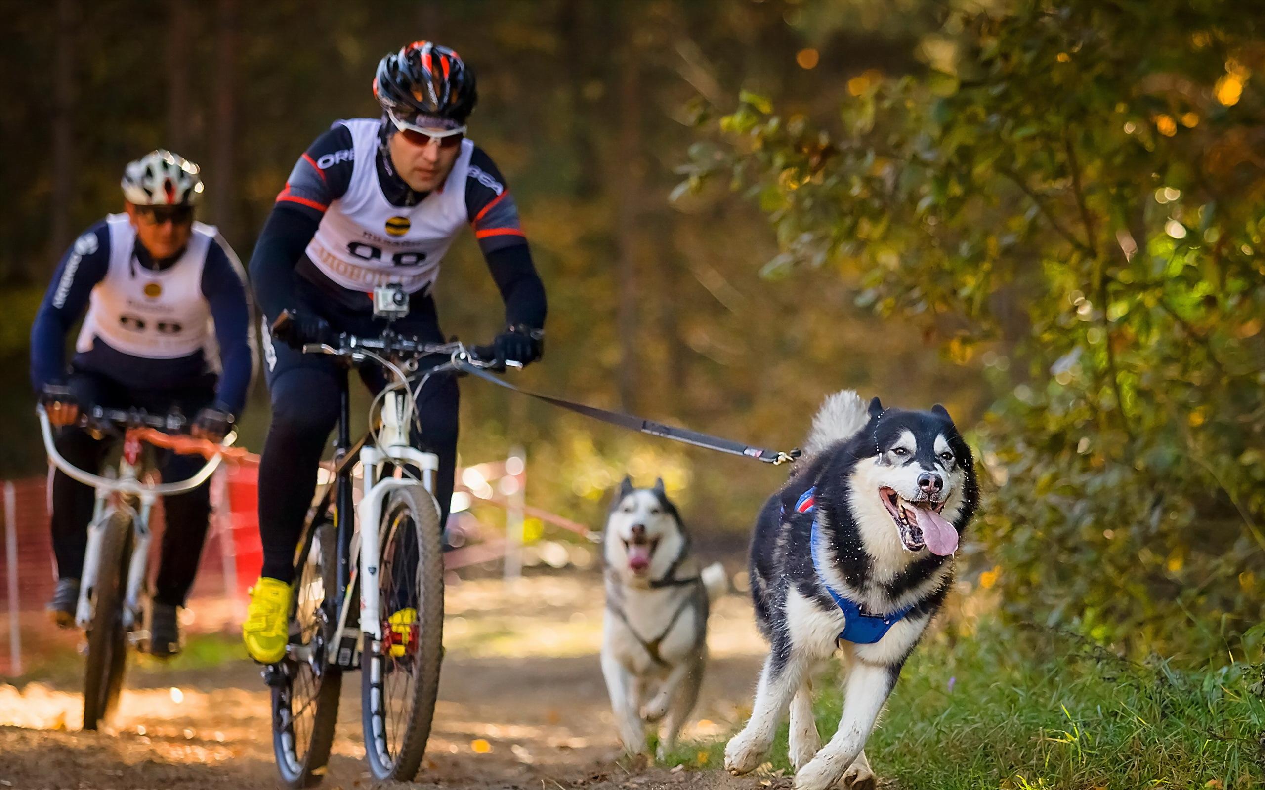 спорт велосипед споротсмен мужчина  № 1633607 загрузить