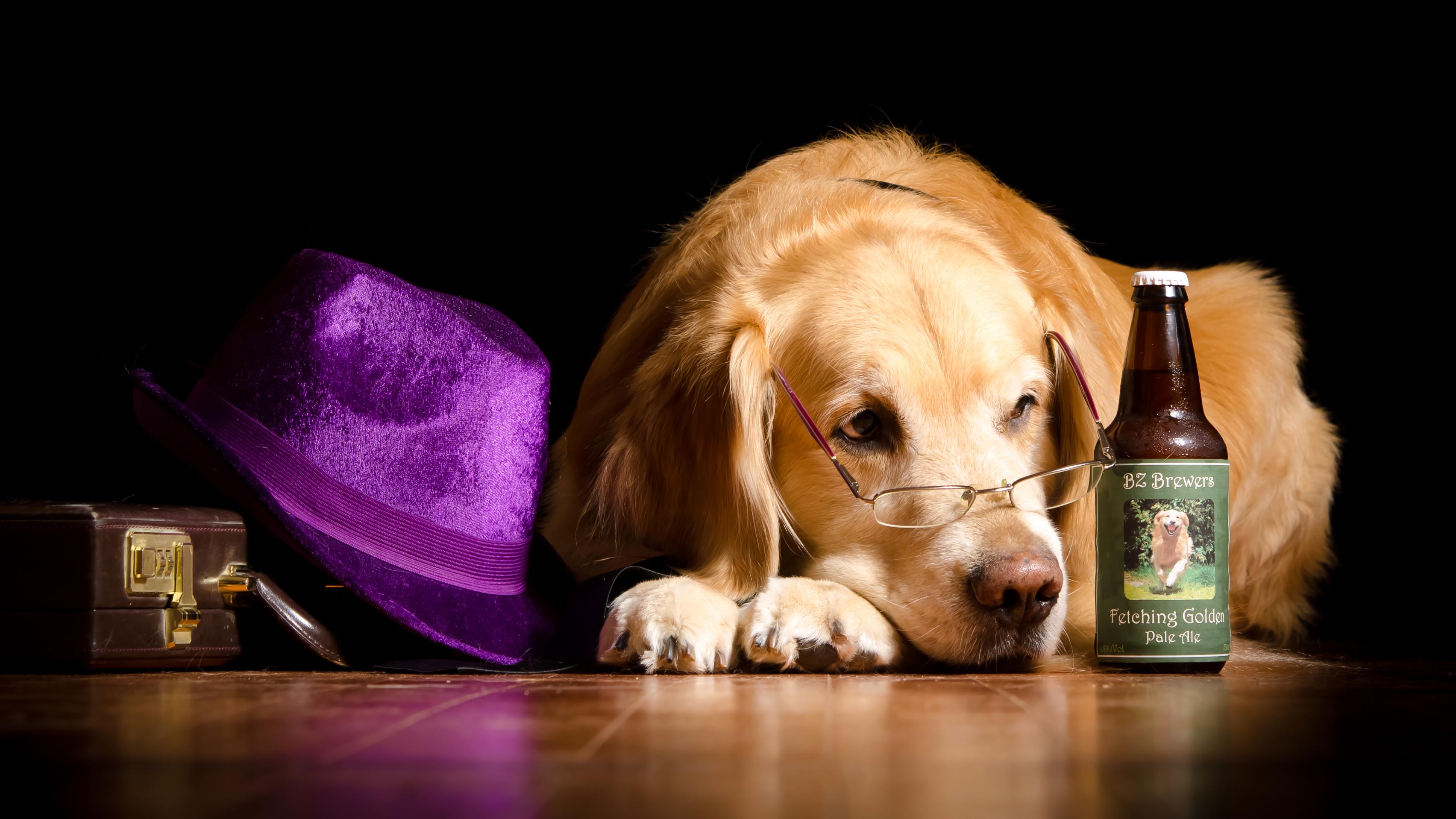 Певец собака юмор очки  № 1527462 бесплатно