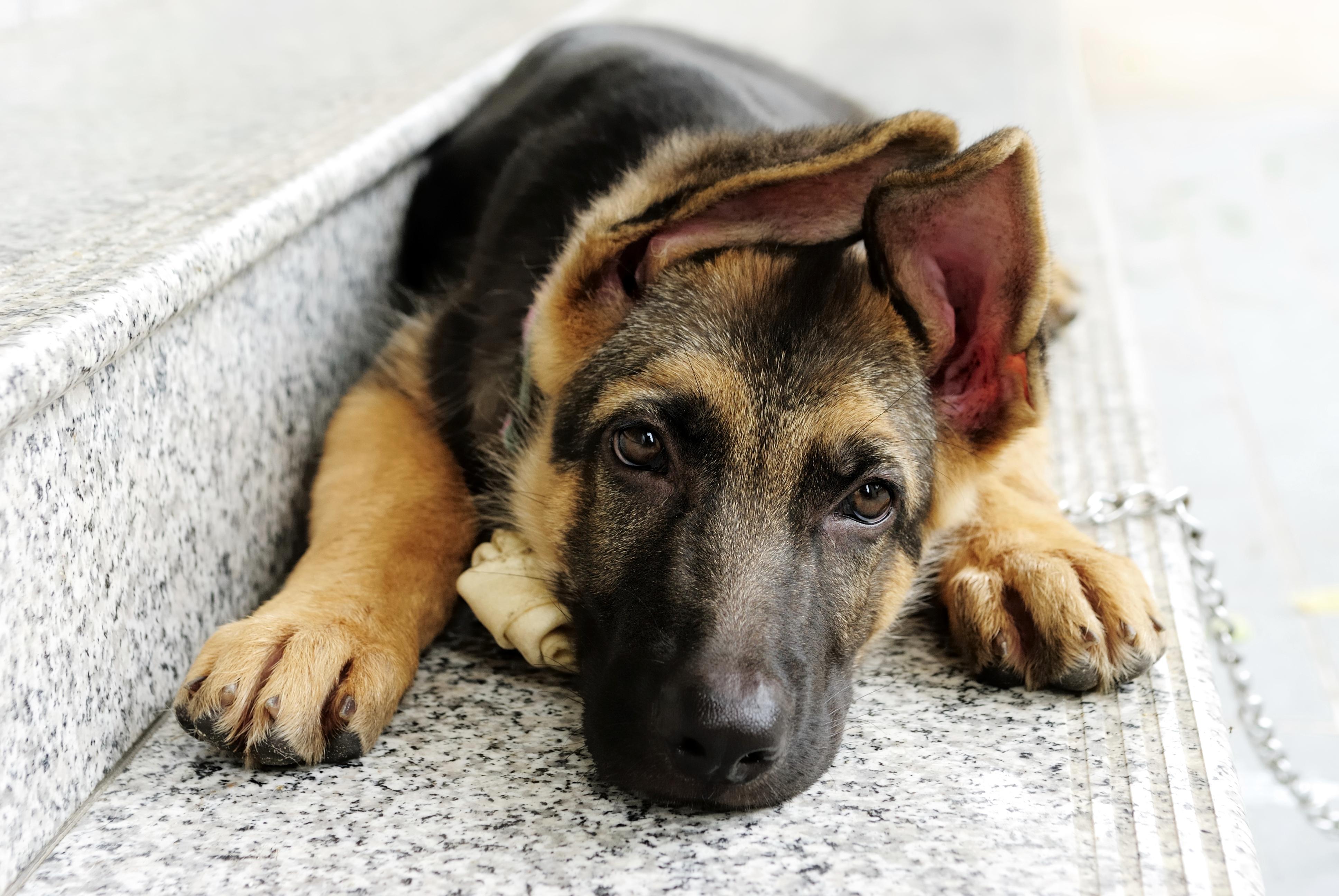 Пёс  № 104511 загрузить