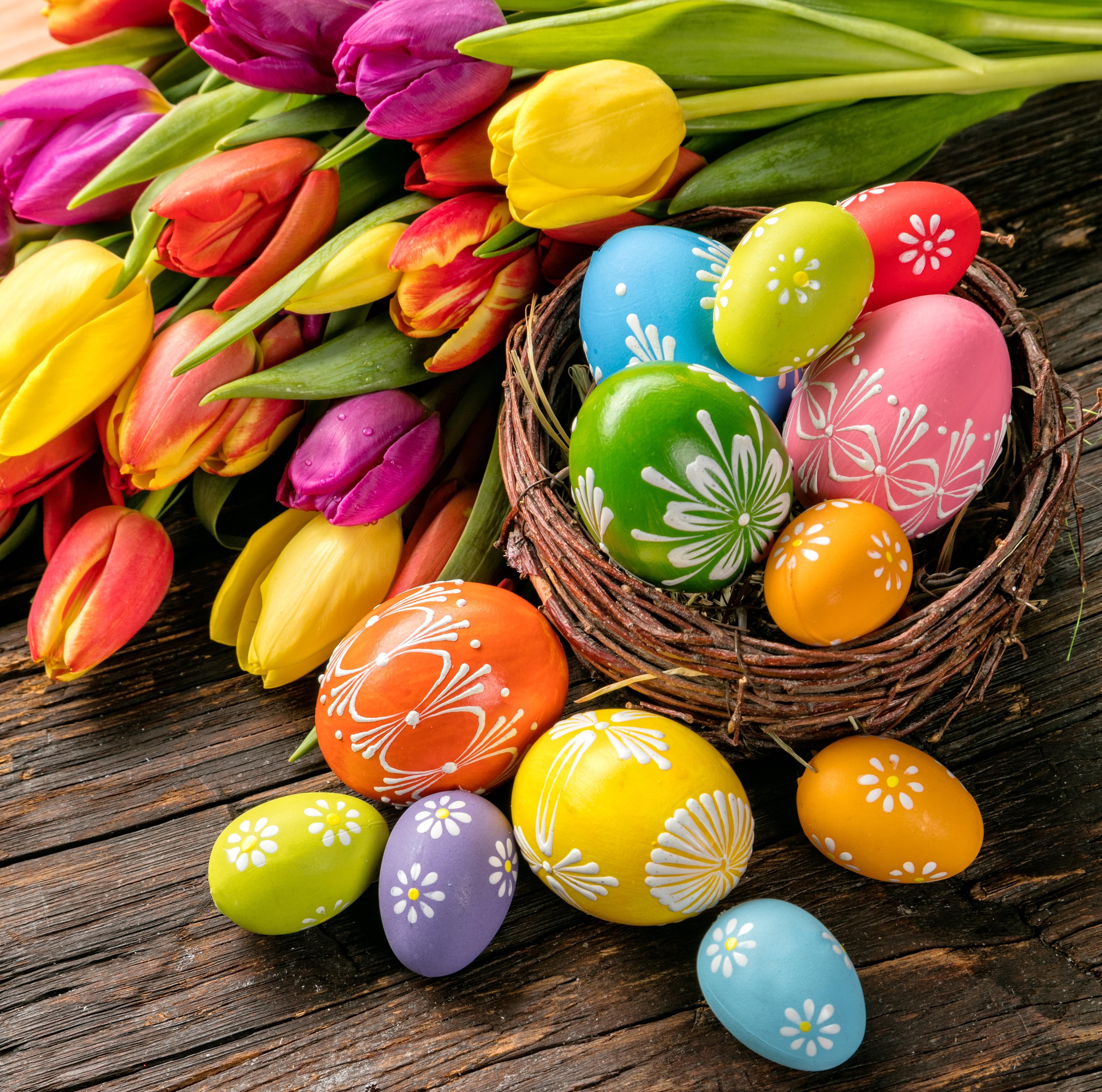природа кролик цветы тюльпаны яйца пасха  № 271774  скачать