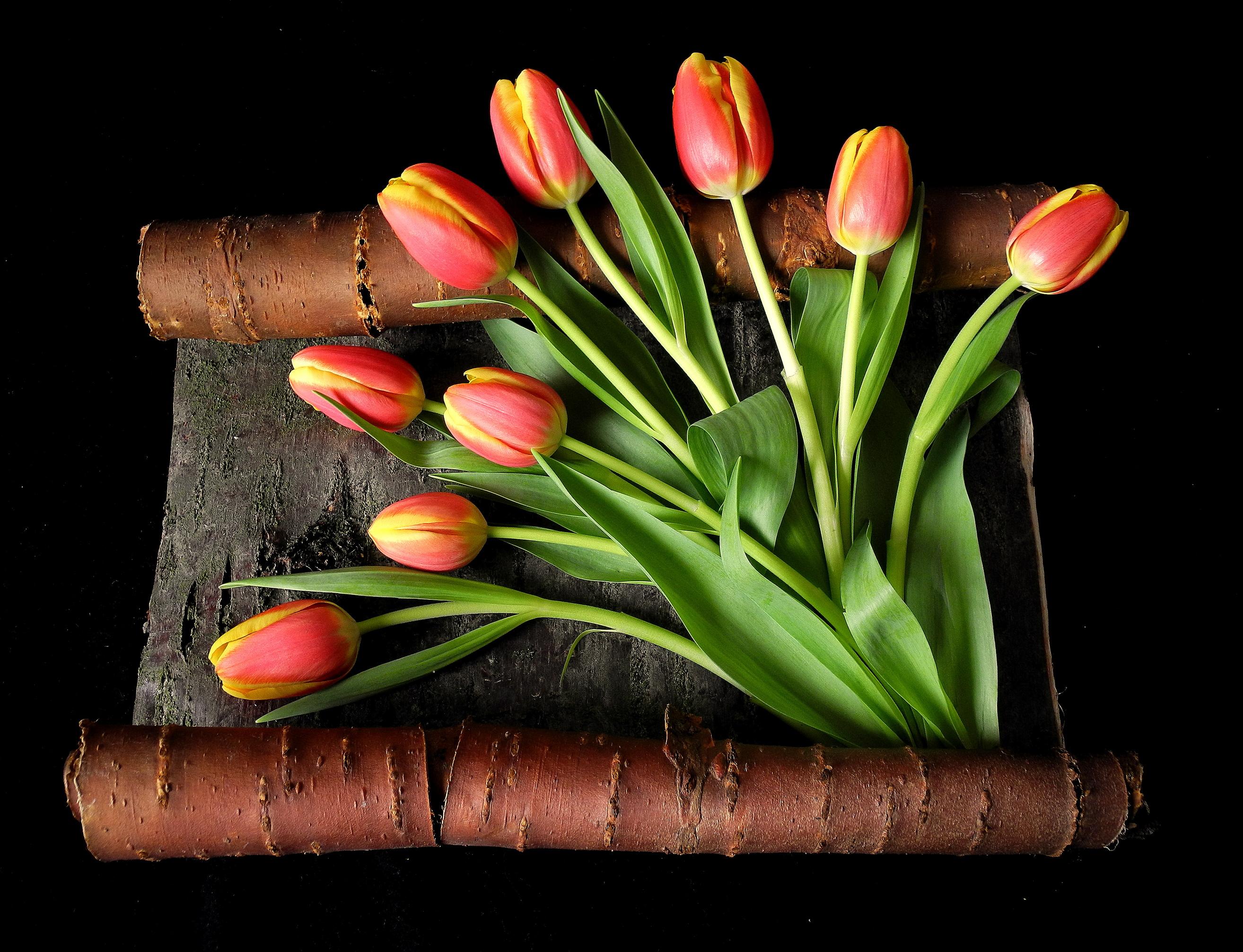 букет,тюльпаны,листья  № 415704 без смс
