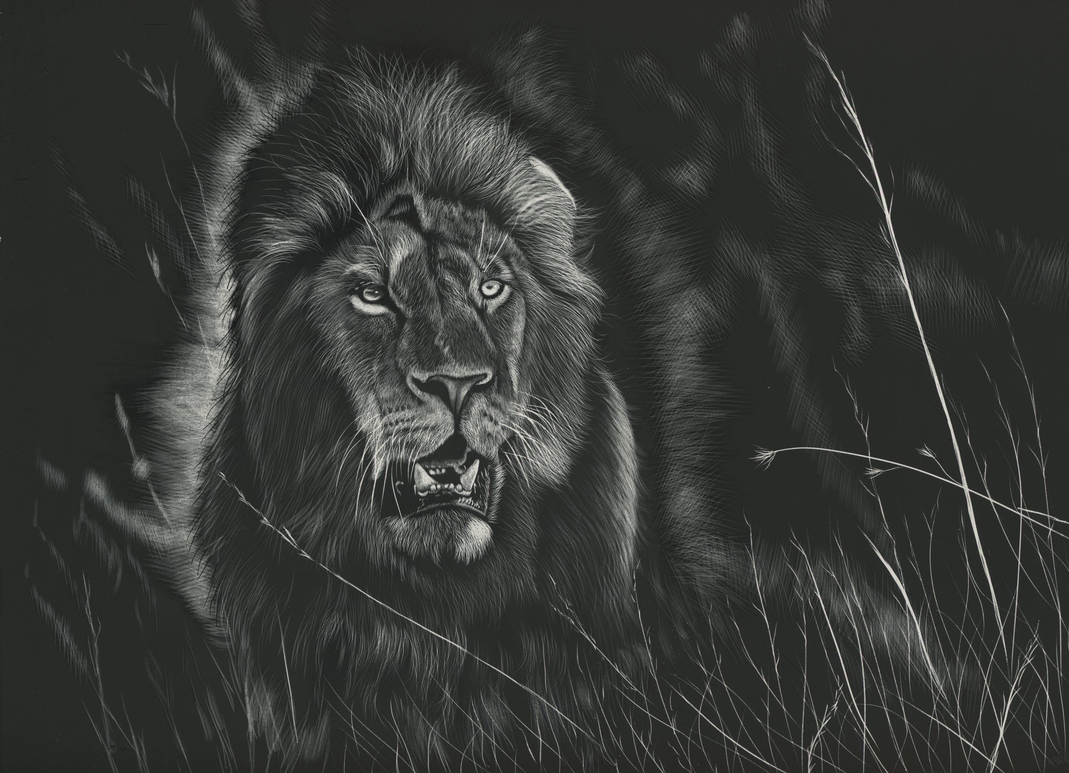 Lion art black and white