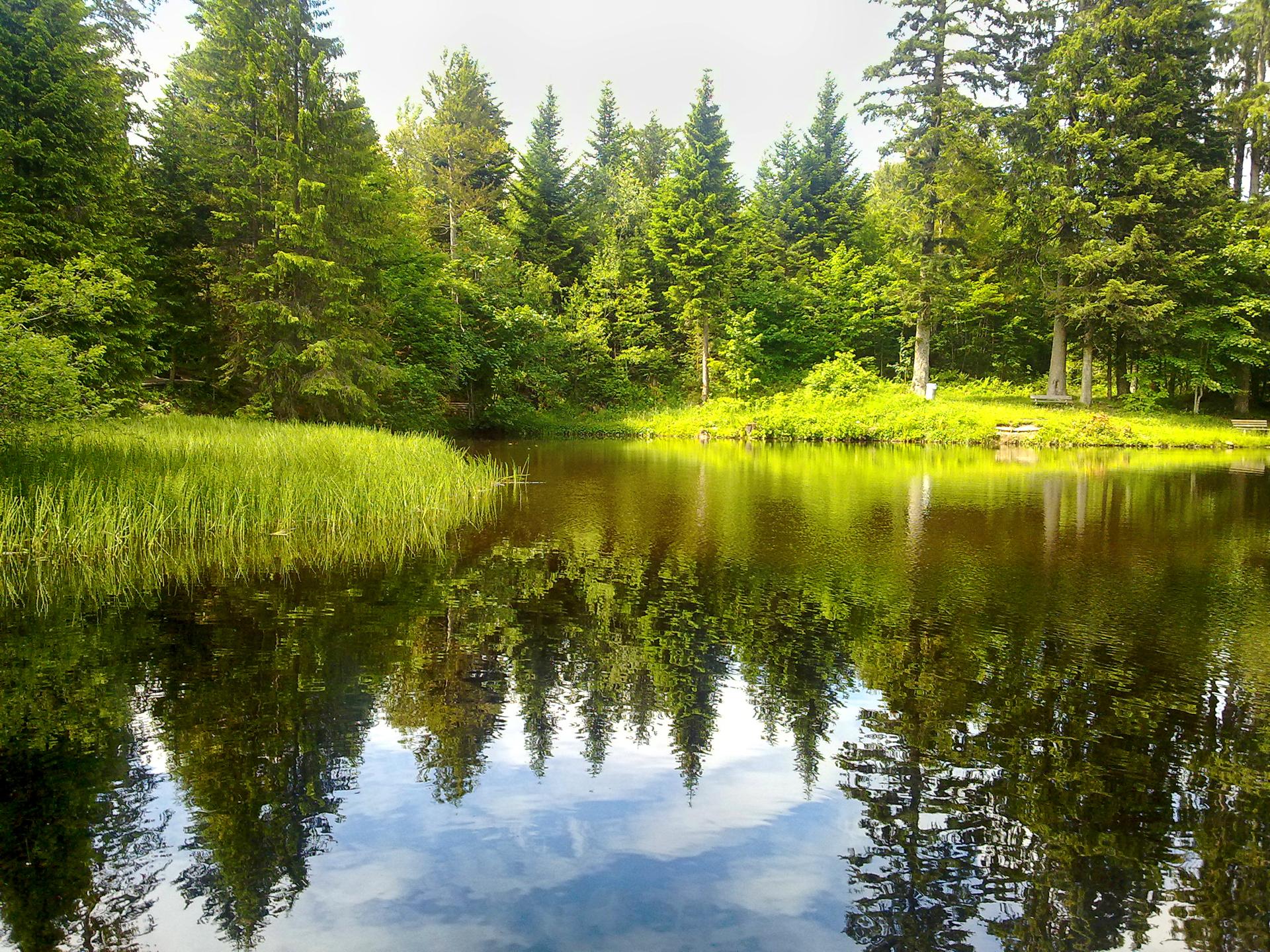 Лес озеро деревья  № 2404449 загрузить