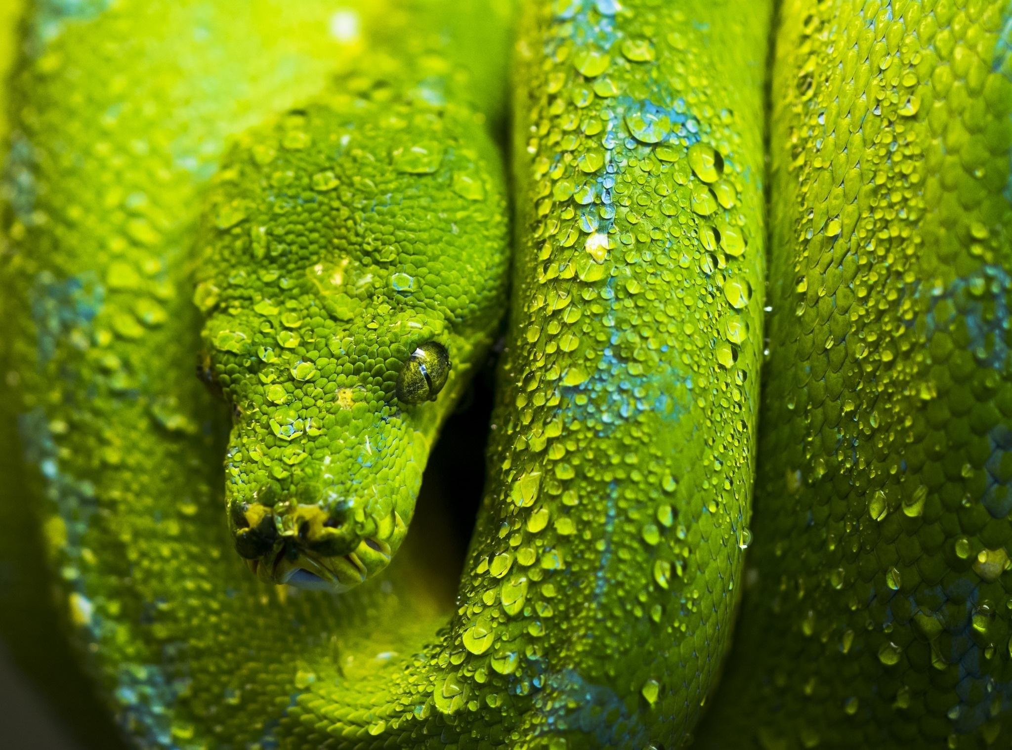 Зеленая змея макро съемка  № 3233906  скачать