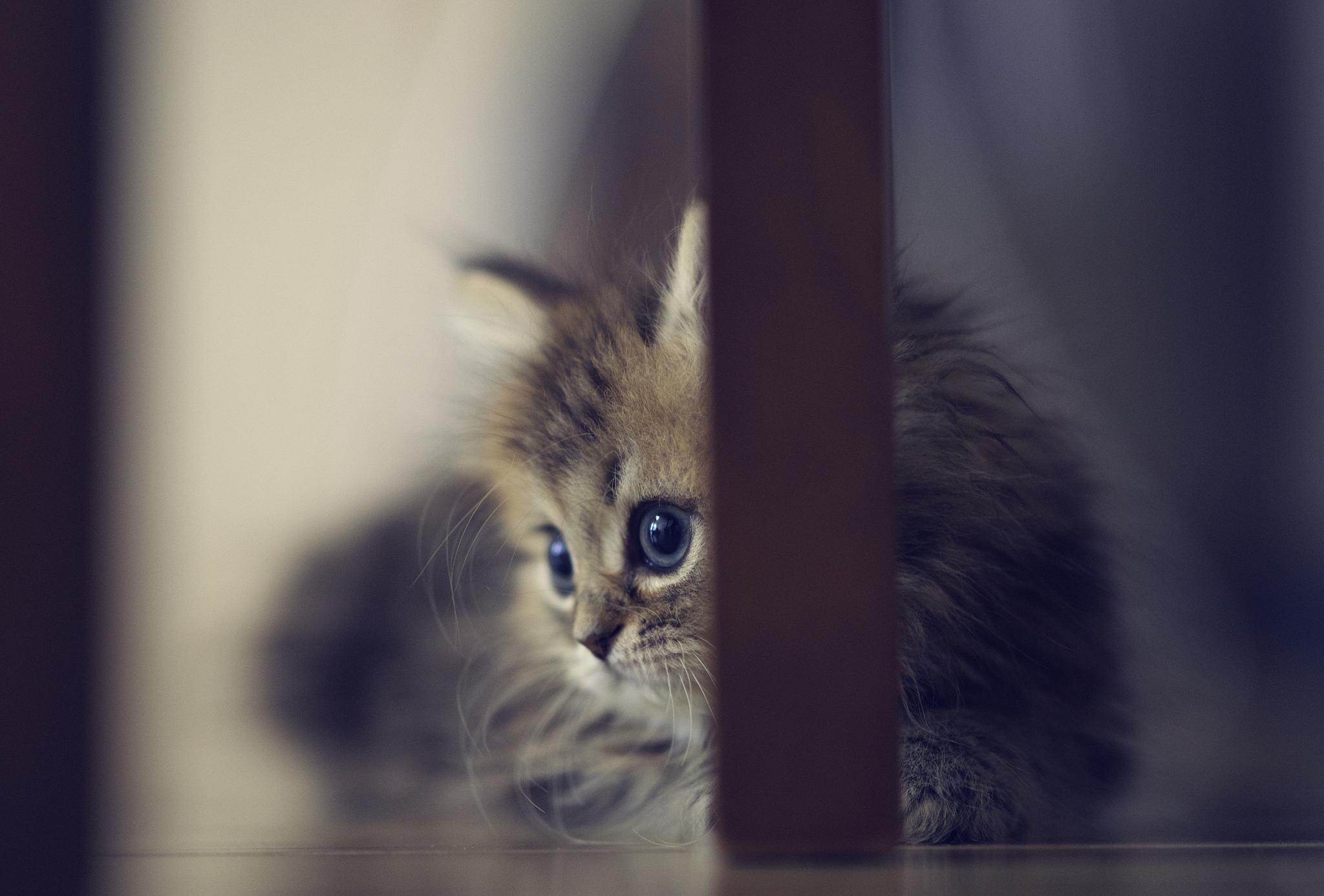 котята на окне kittens on the window  № 3063234  скачать