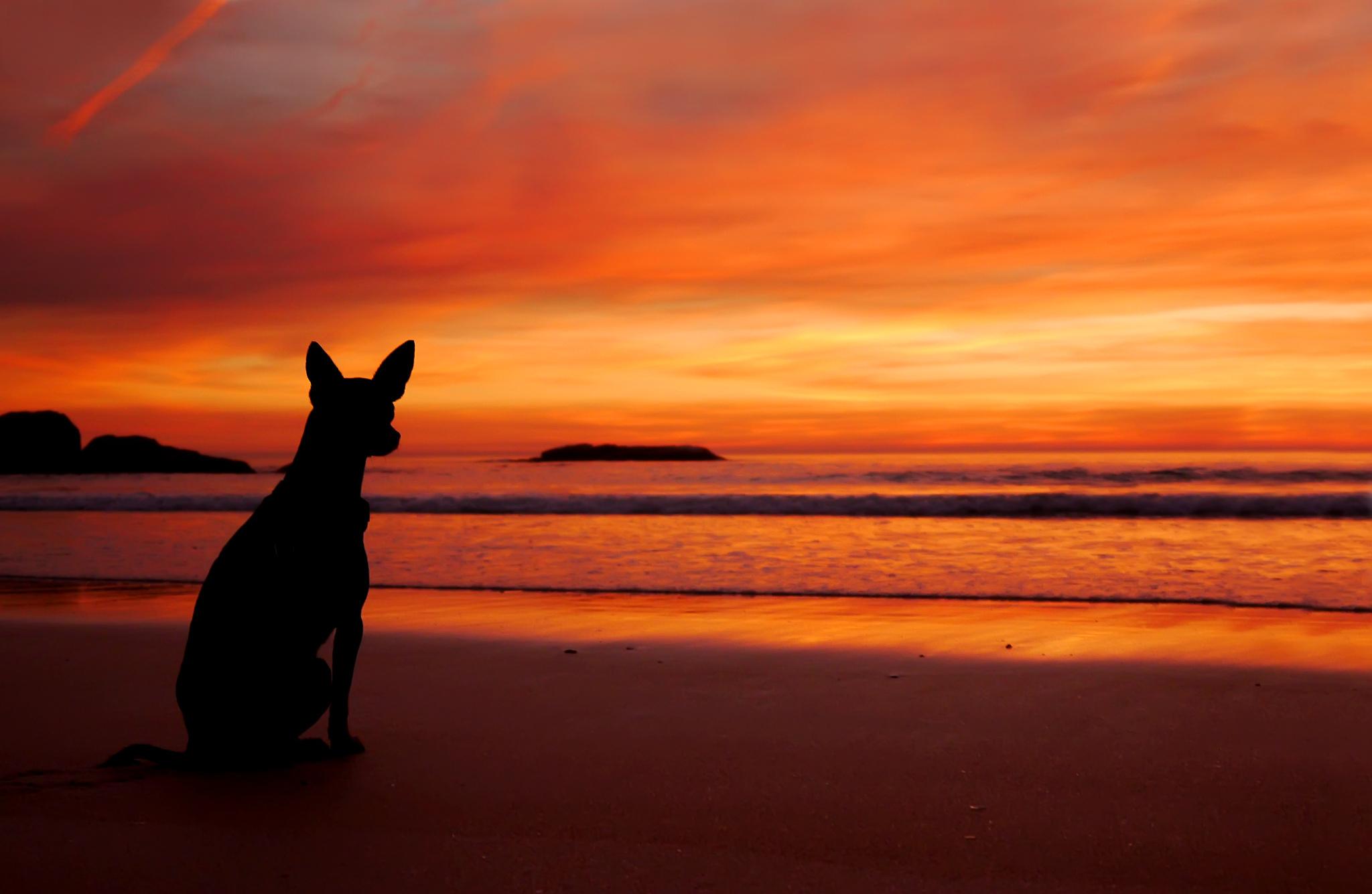 Собака на фоне заката  № 2038652  скачать