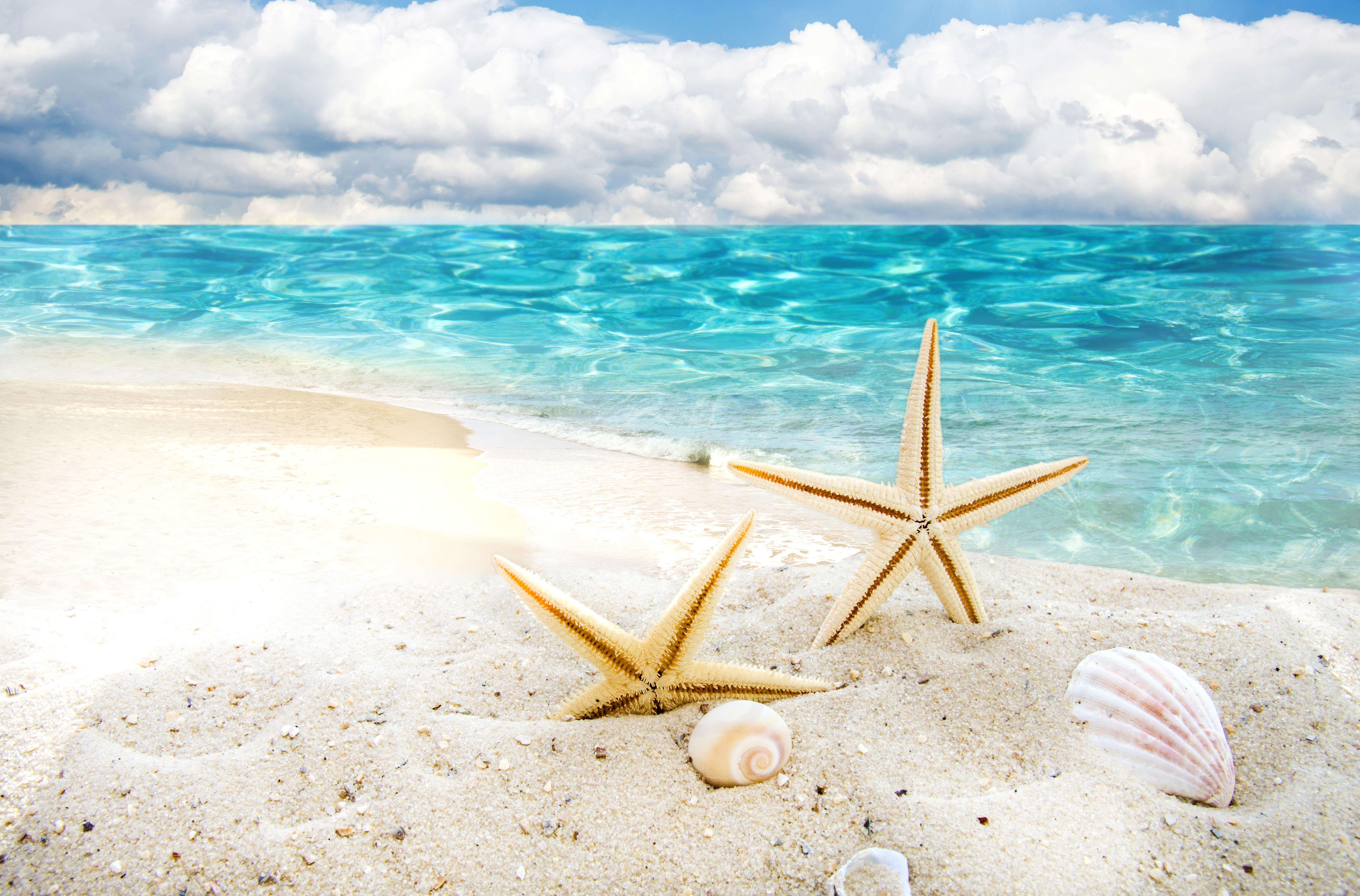 природа горизонт море морская звезда  № 623105 бесплатно