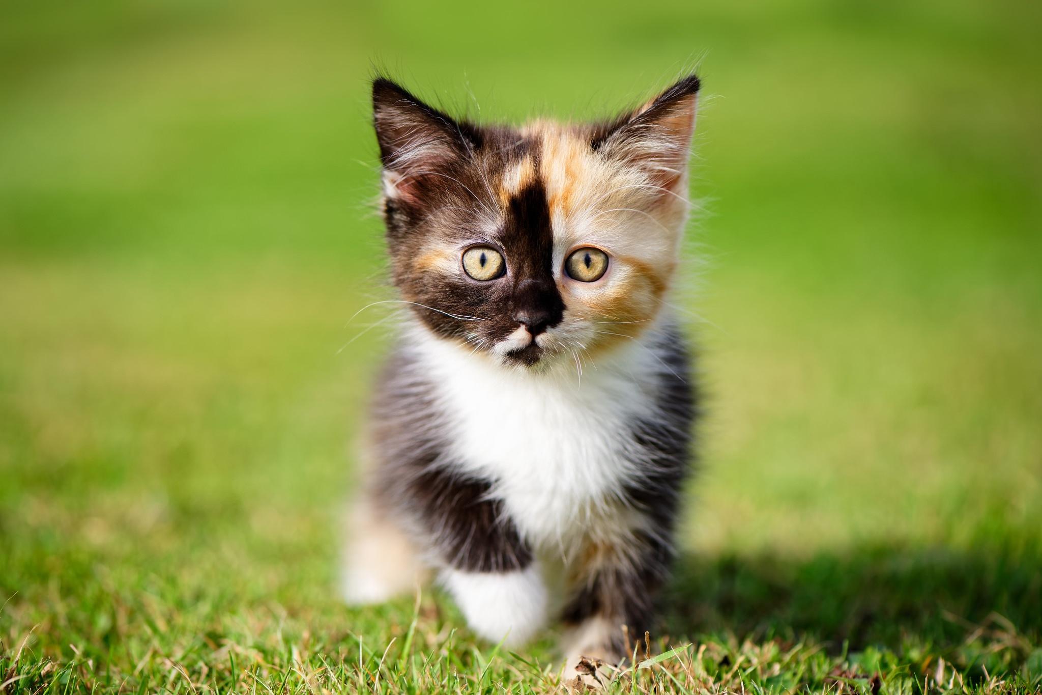 Котенок на травке  № 2954254 бесплатно