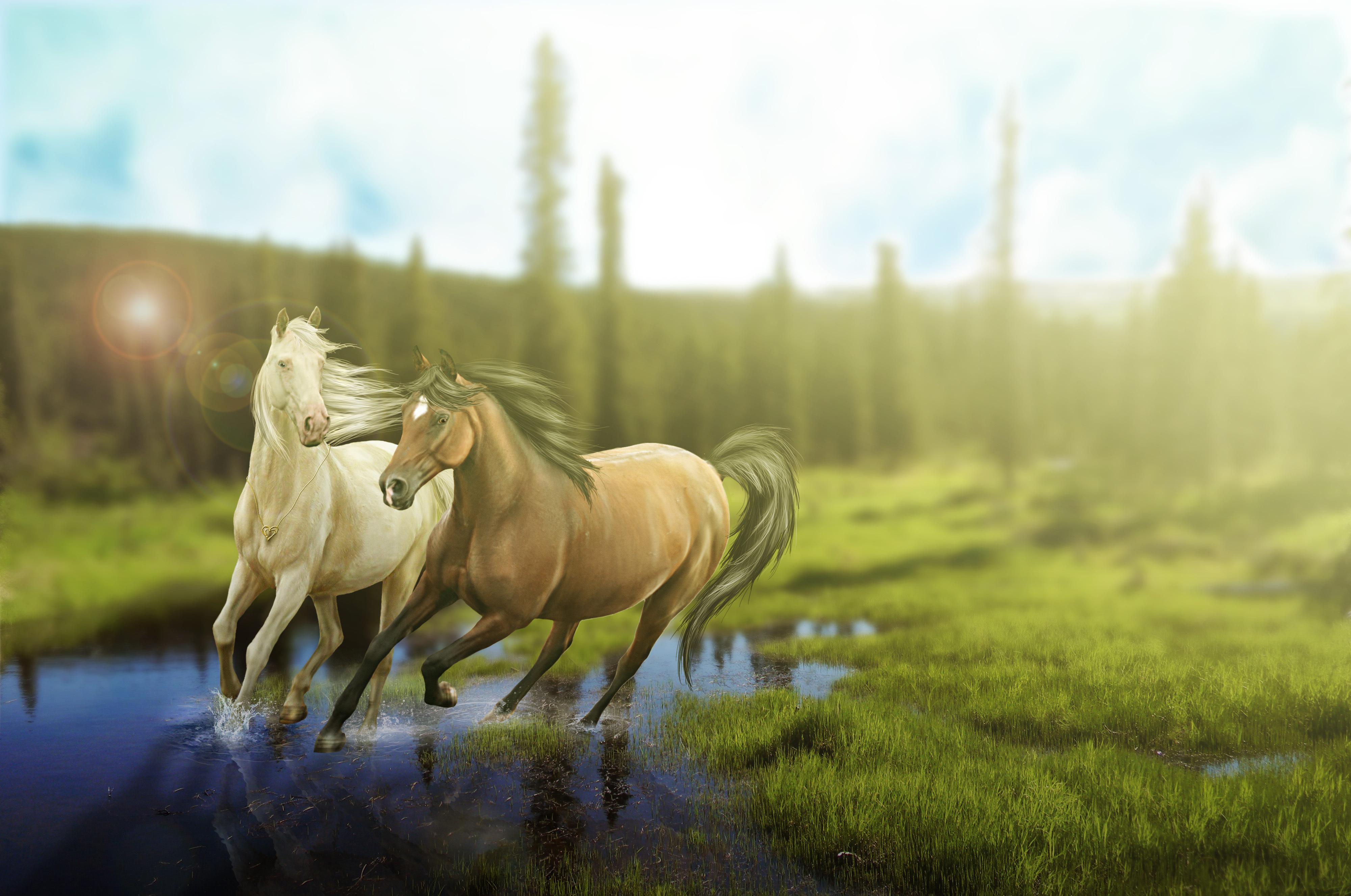 рисунок графика лошадь природа животные figure graphics horse nature animals  № 3925628 без смс