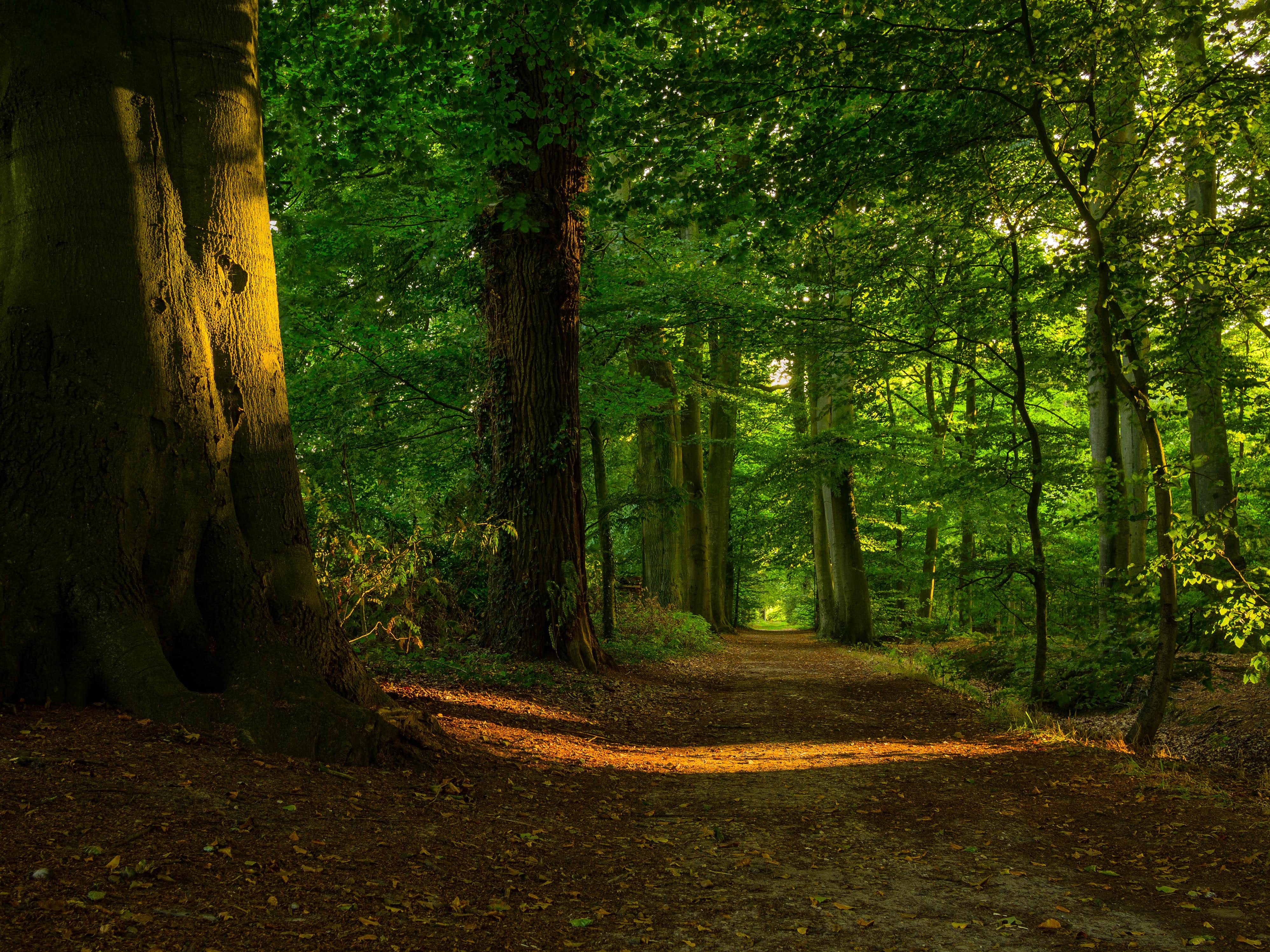 природа деревья лес тропа  № 1206260 бесплатно