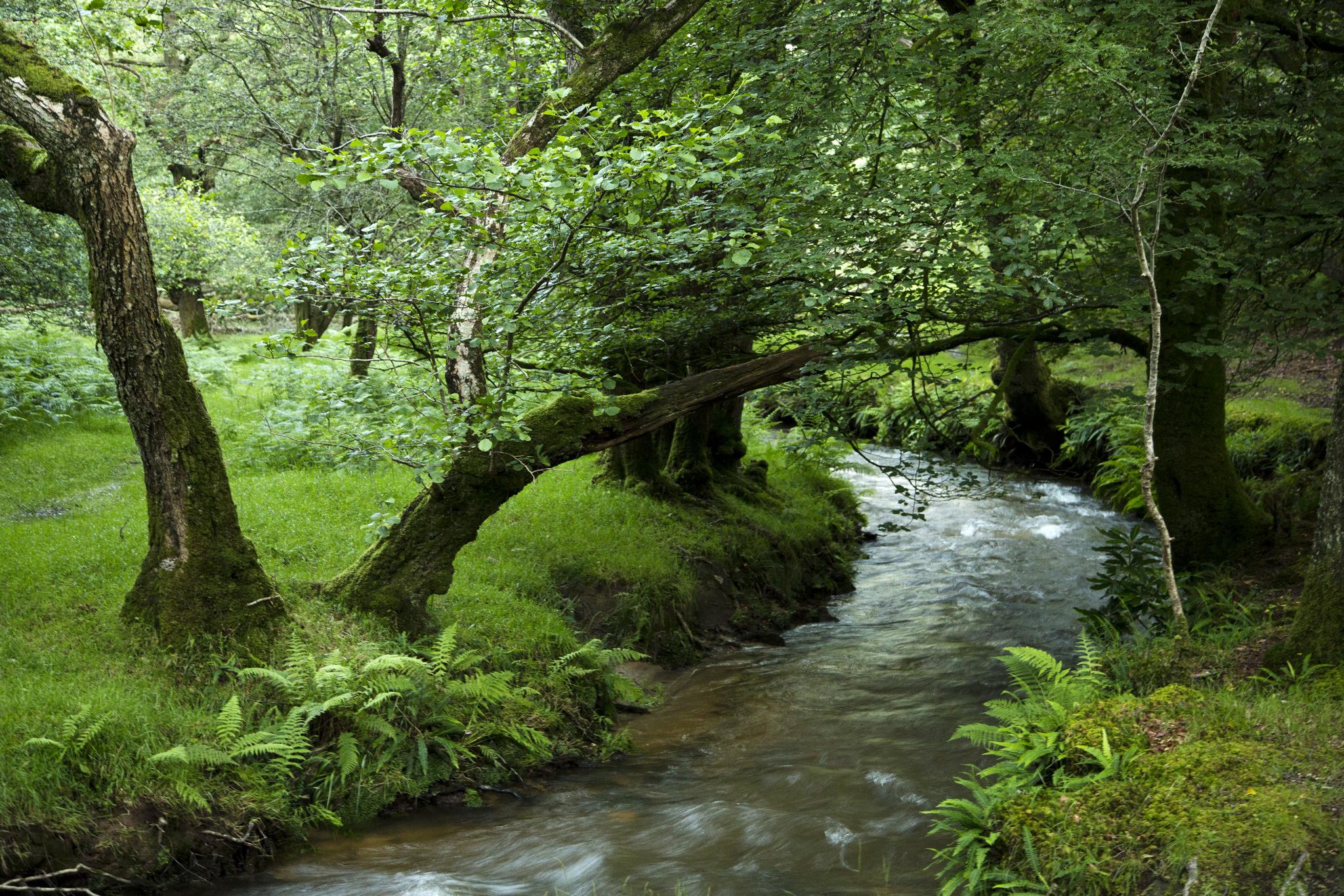 лесной ручей  № 1489992 бесплатно