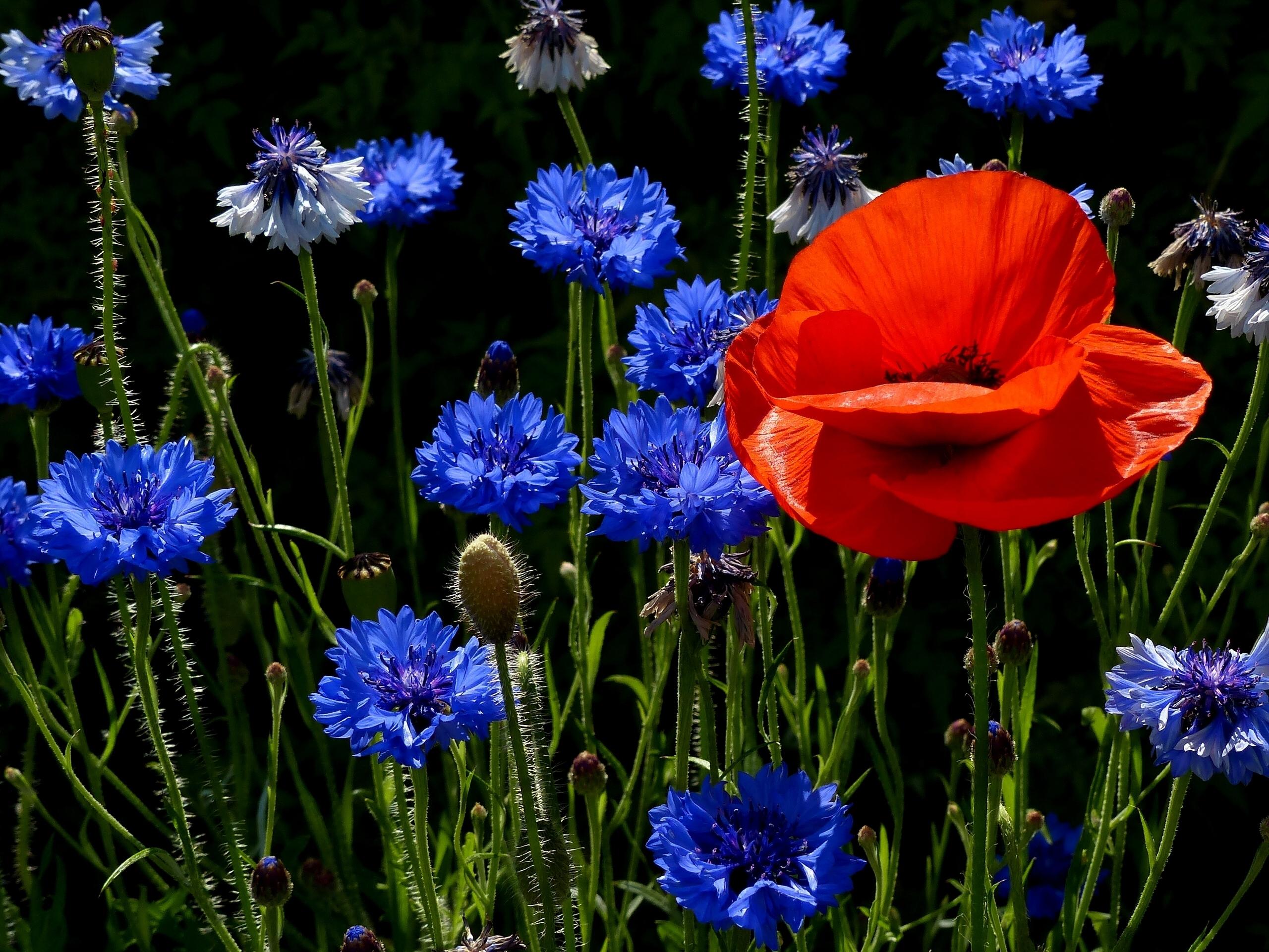 шмель,ирис,цветок,лето  № 529547  скачать