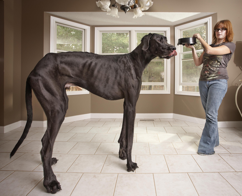 Член пса вошел 4 фотография