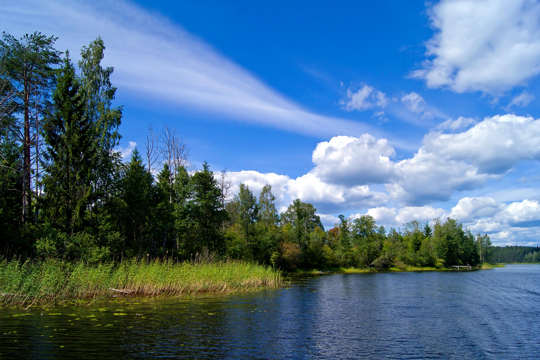 природа река деревья облака небо  № 316500 без смс