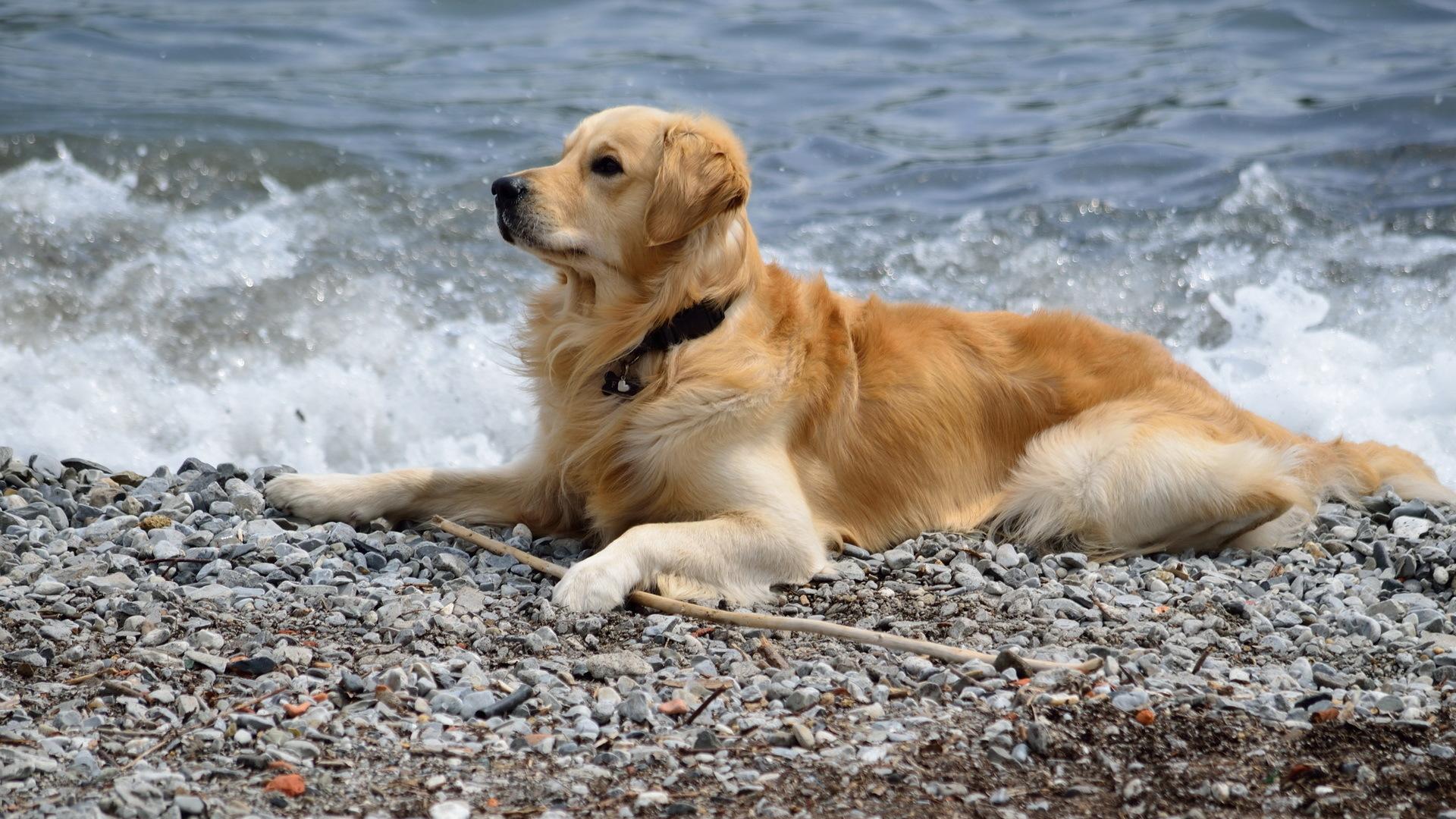 собака песок вода животное природа  № 956881  скачать