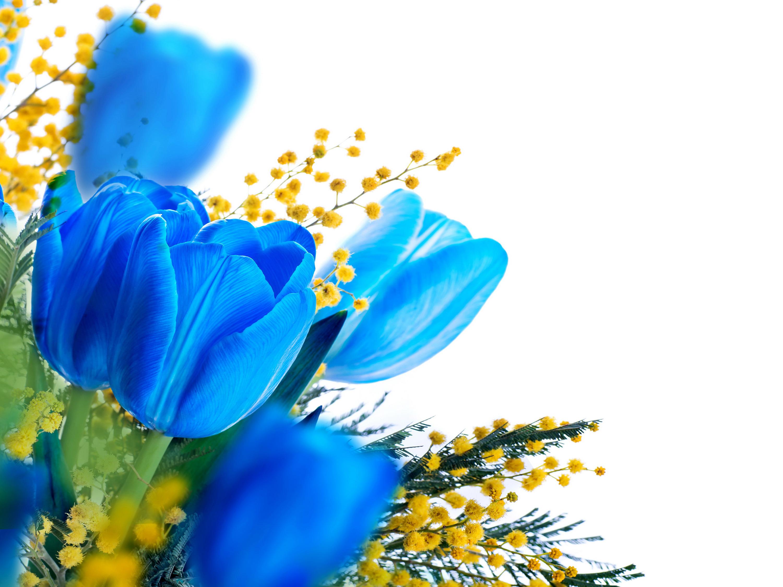 синий цветок картинка: