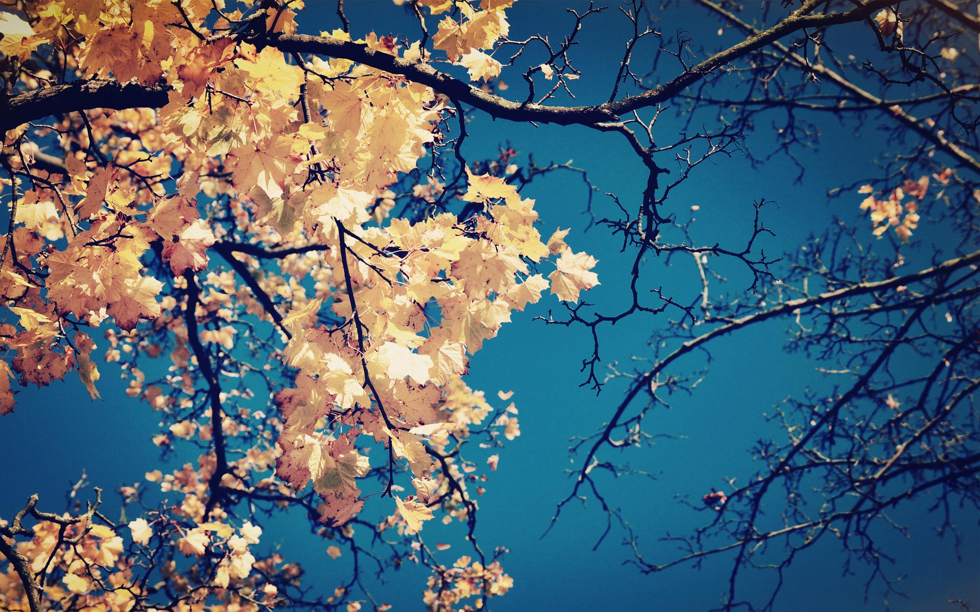 природа деревья листья осень nature trees leaves autumn  № 1036888 загрузить