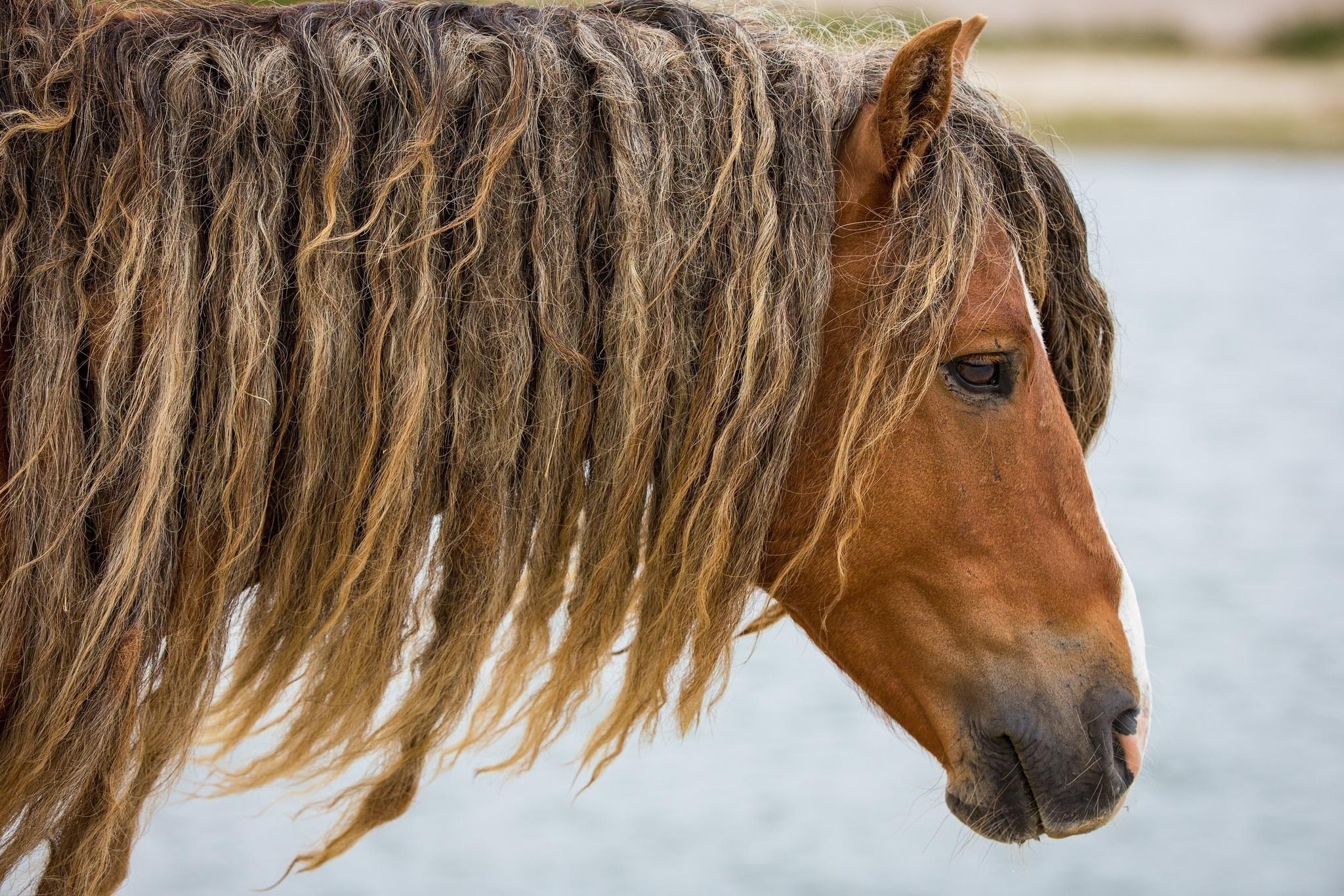 лошадь с гривой  № 3127151 без смс