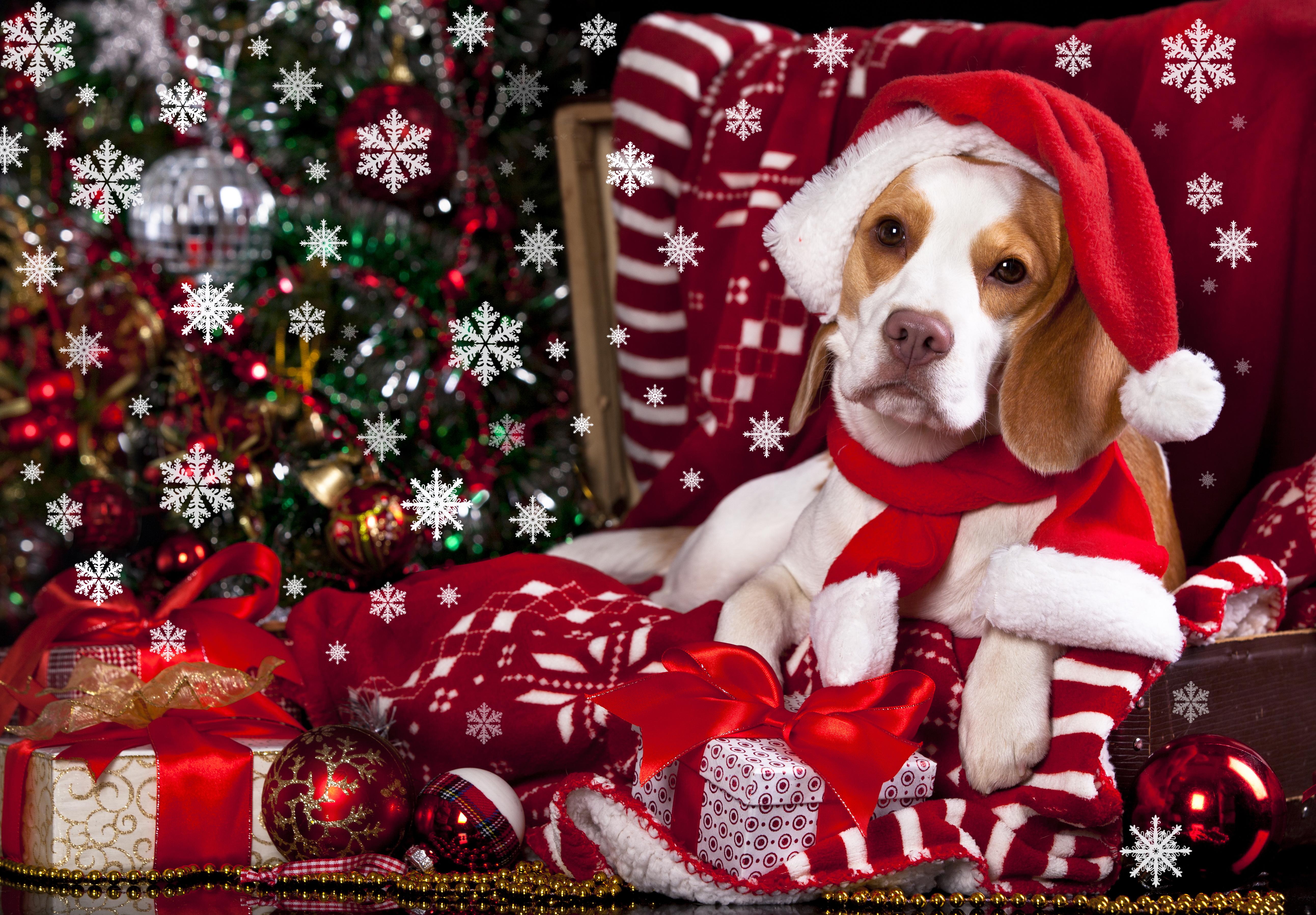 собачка в новогодней шапочке  № 1302002 без смс