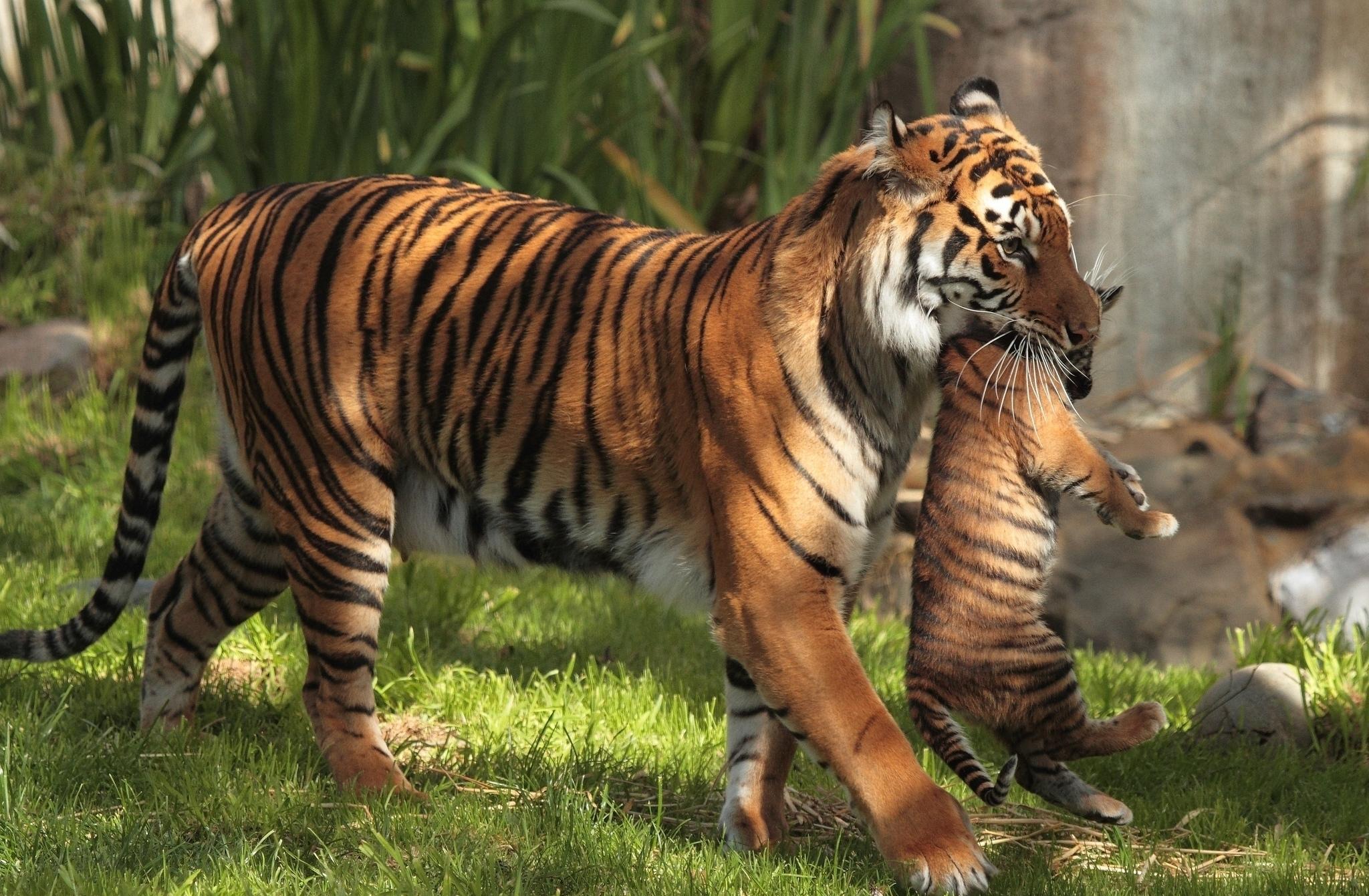 Espectaculares fotos de animales 16