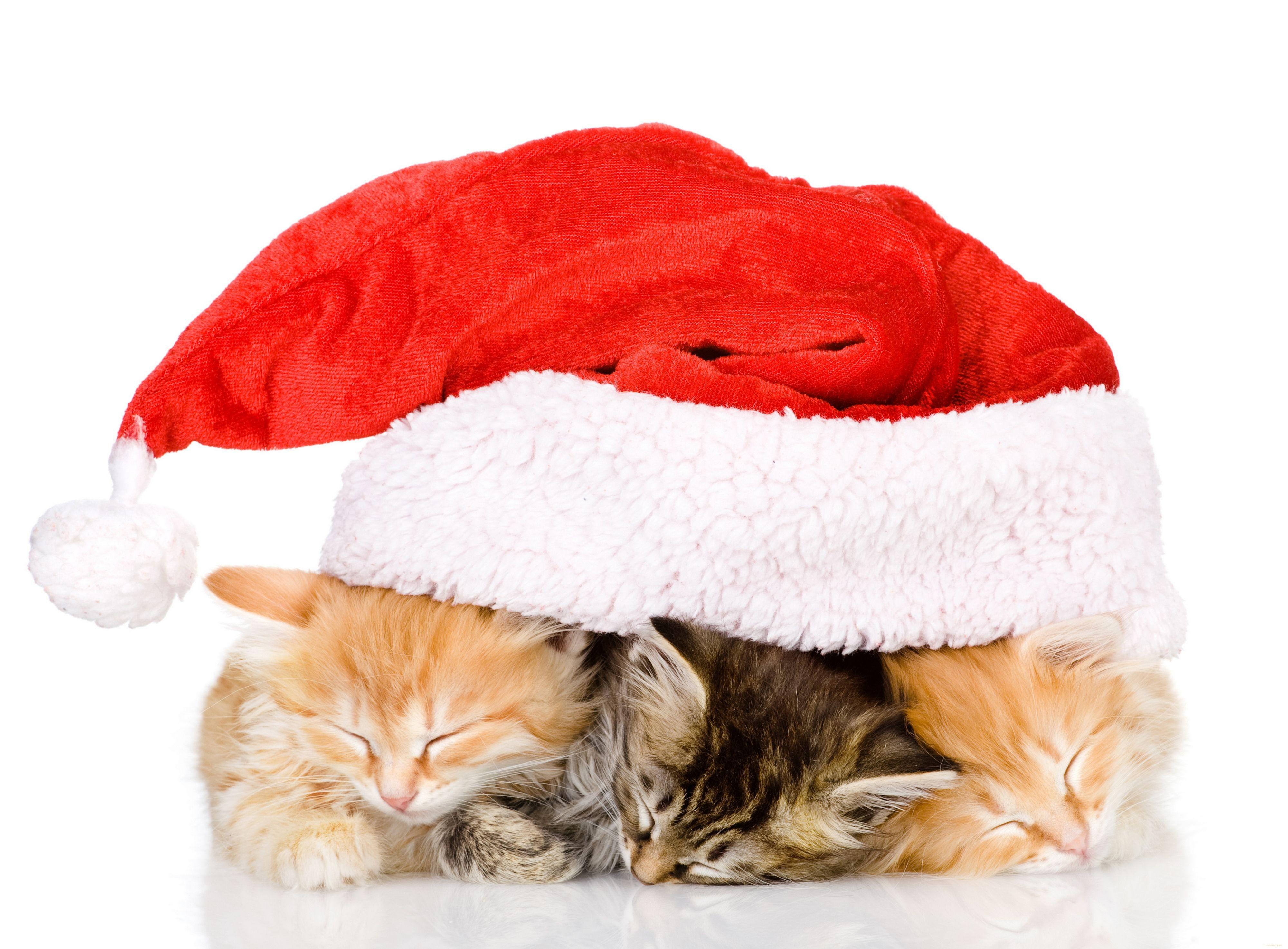 Кот под шапкой  № 3059191 бесплатно
