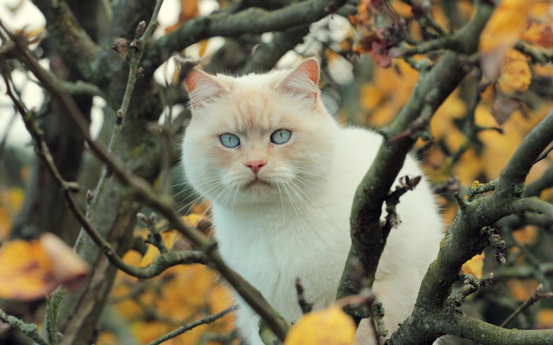 Кот на ветке  № 1118371 без смс