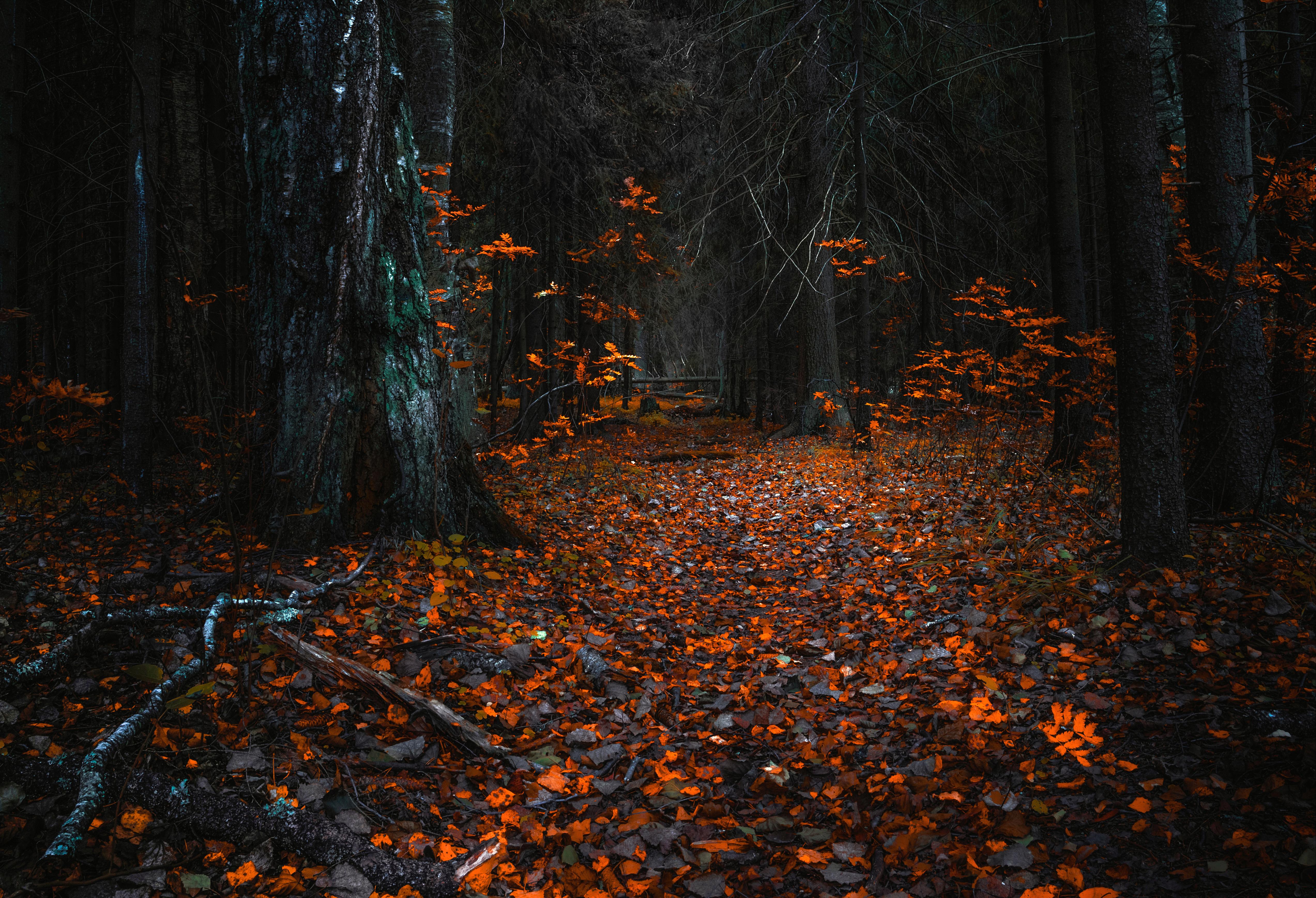 Осень листва лес  № 3162760 бесплатно