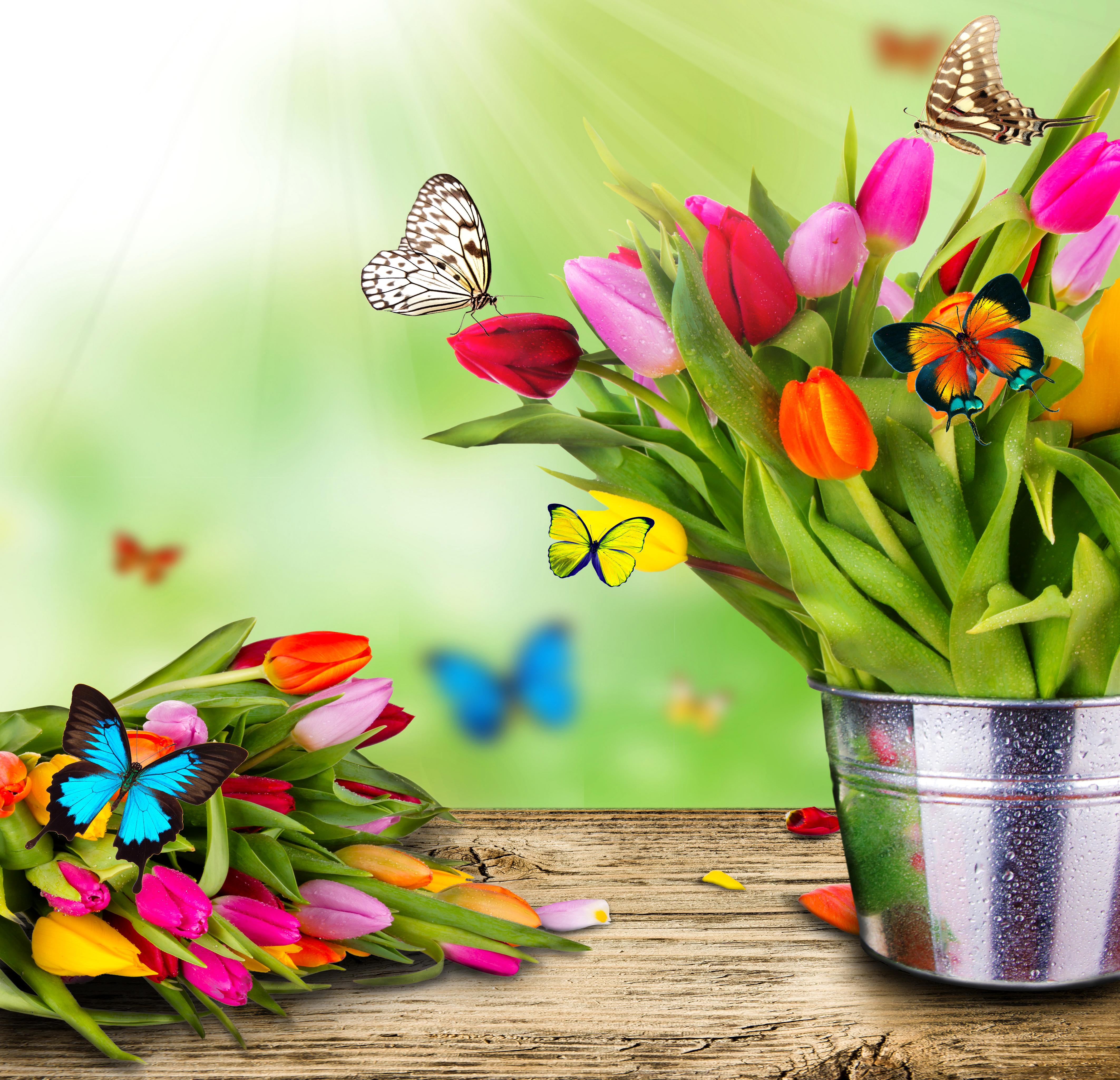 природа цветы ведро  № 464611 загрузить