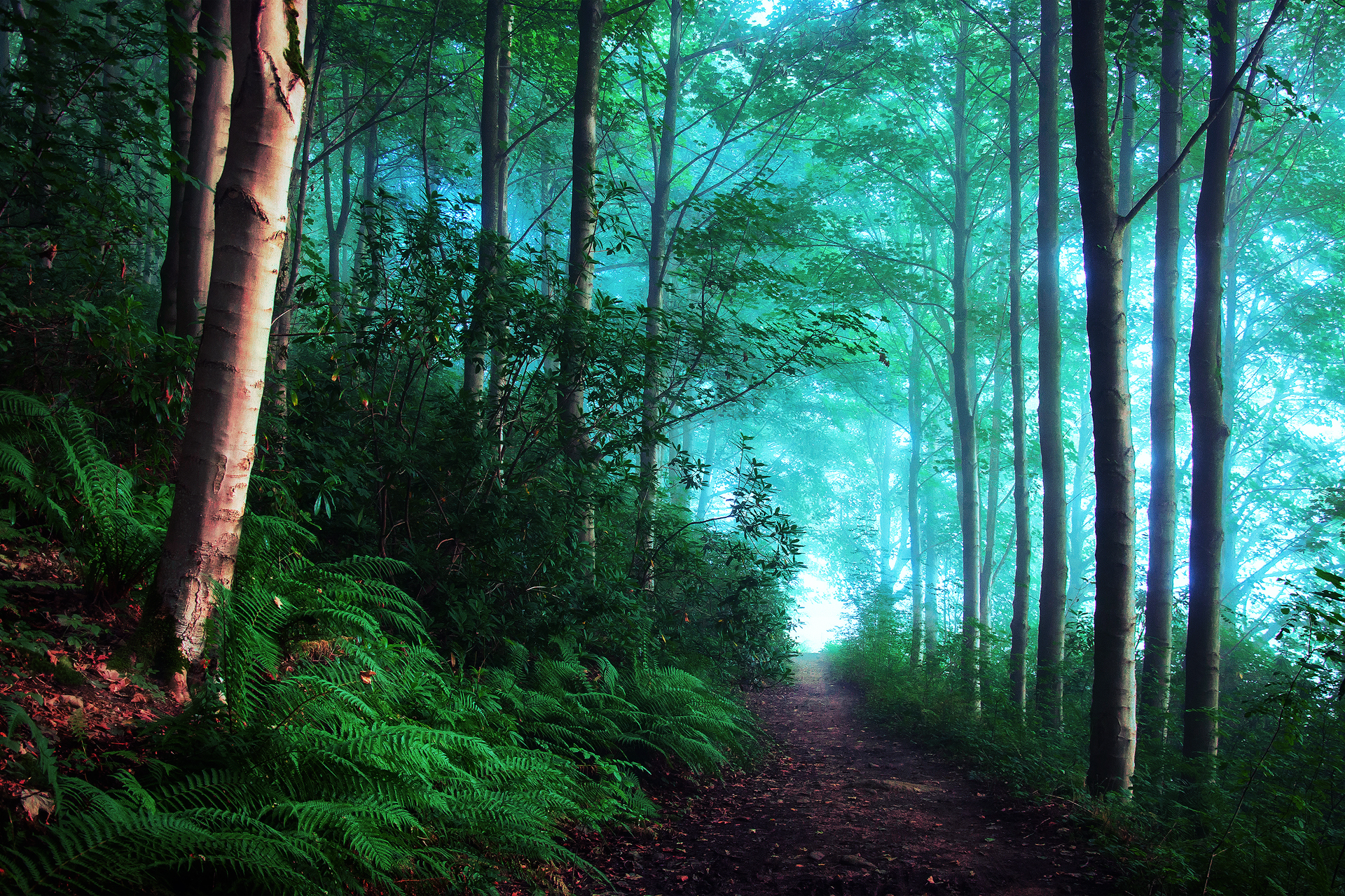 природа деревья лес тропа  № 1206362  скачать