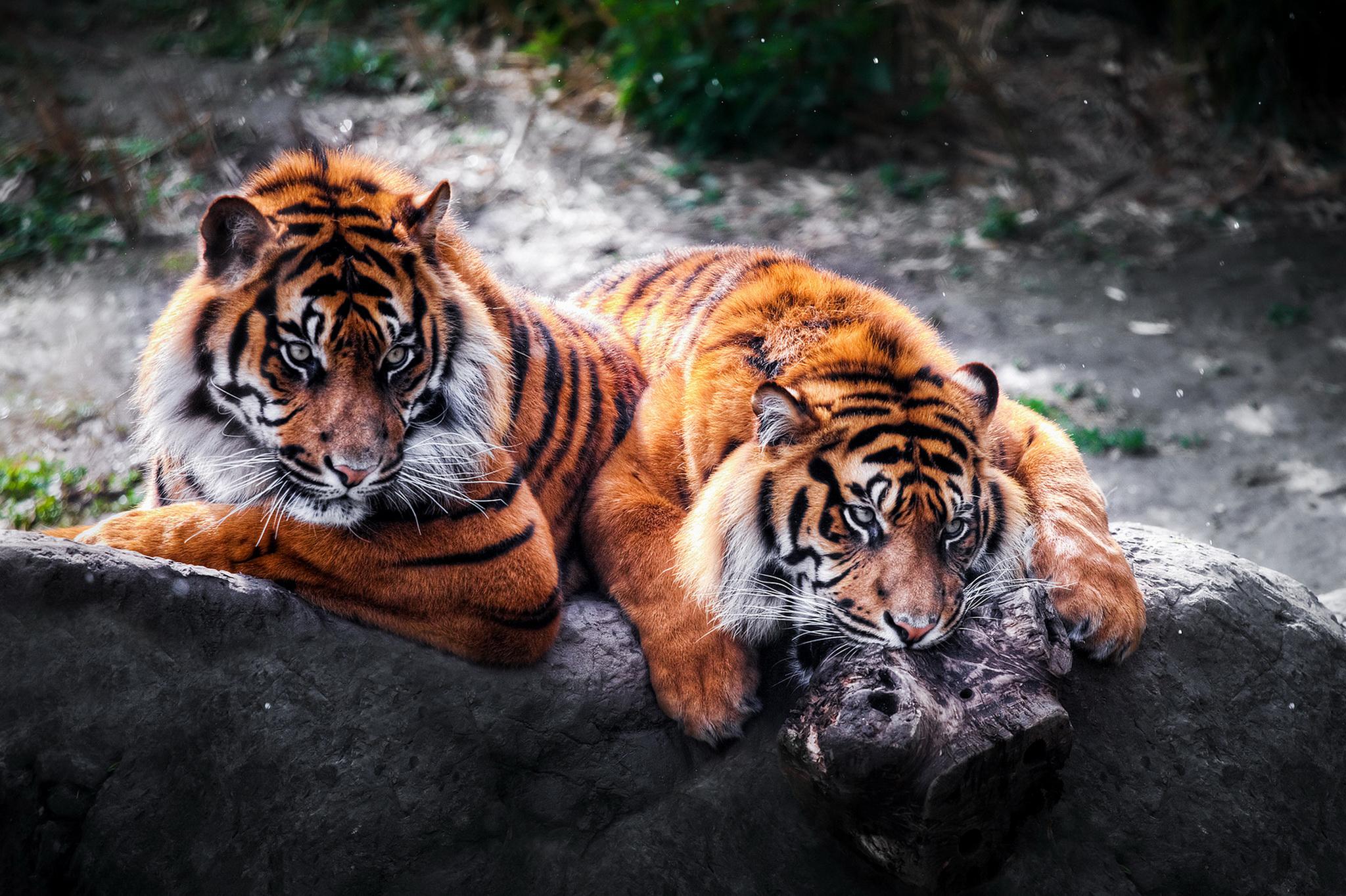 Животное 1366 х768 картинки 6