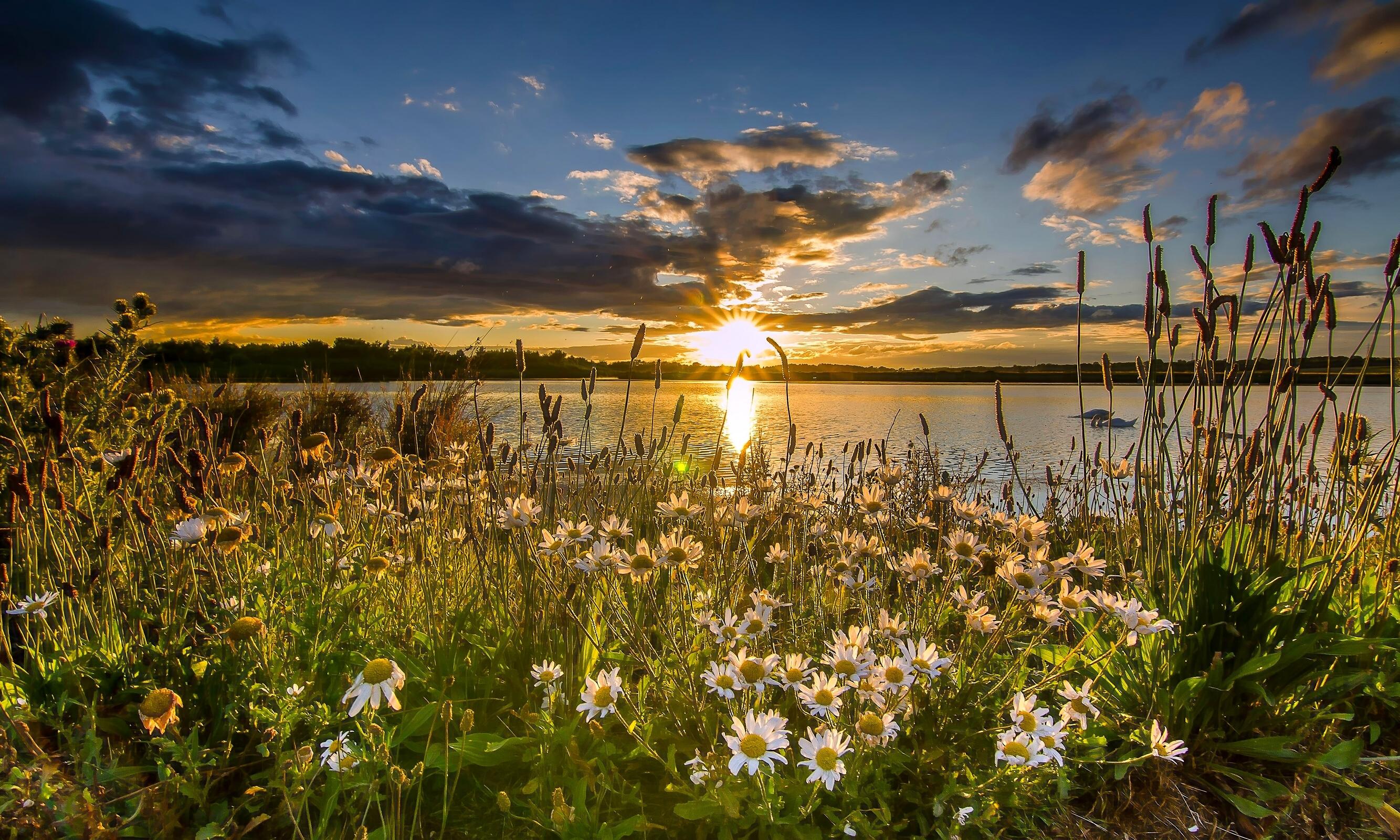 закат трава цветы озеро  № 1025233 загрузить