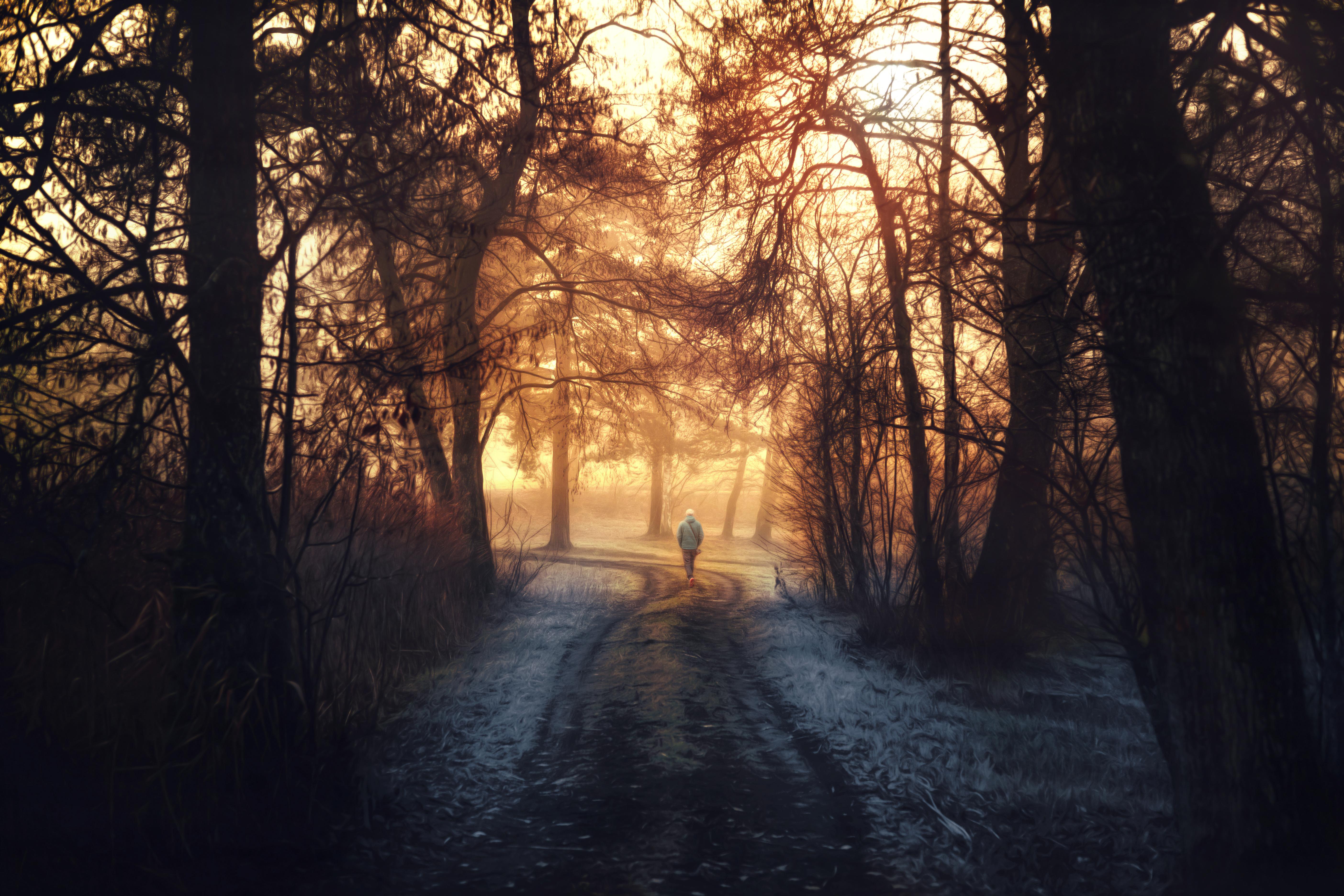 Заброшенная дорога в лесу  № 1103896  скачать