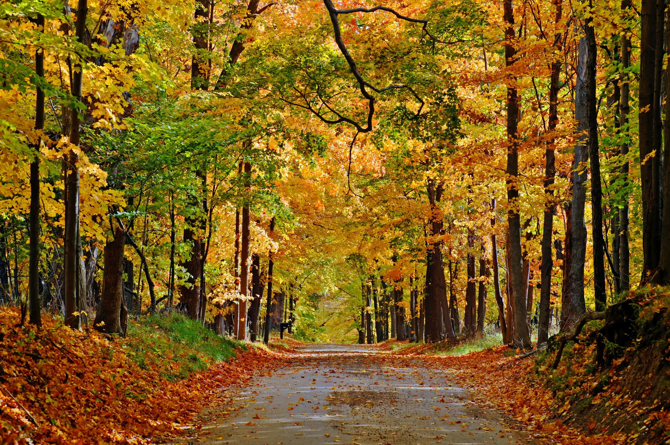 Осенний лиственный лес  № 3193643 бесплатно