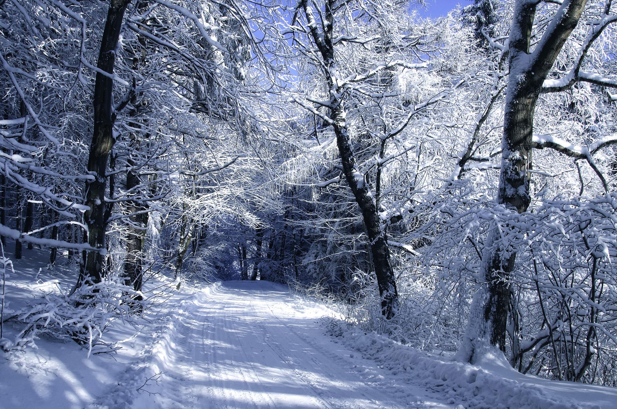 обои для рабочего стола на тему зима скачать бесплатно № 147291 загрузить