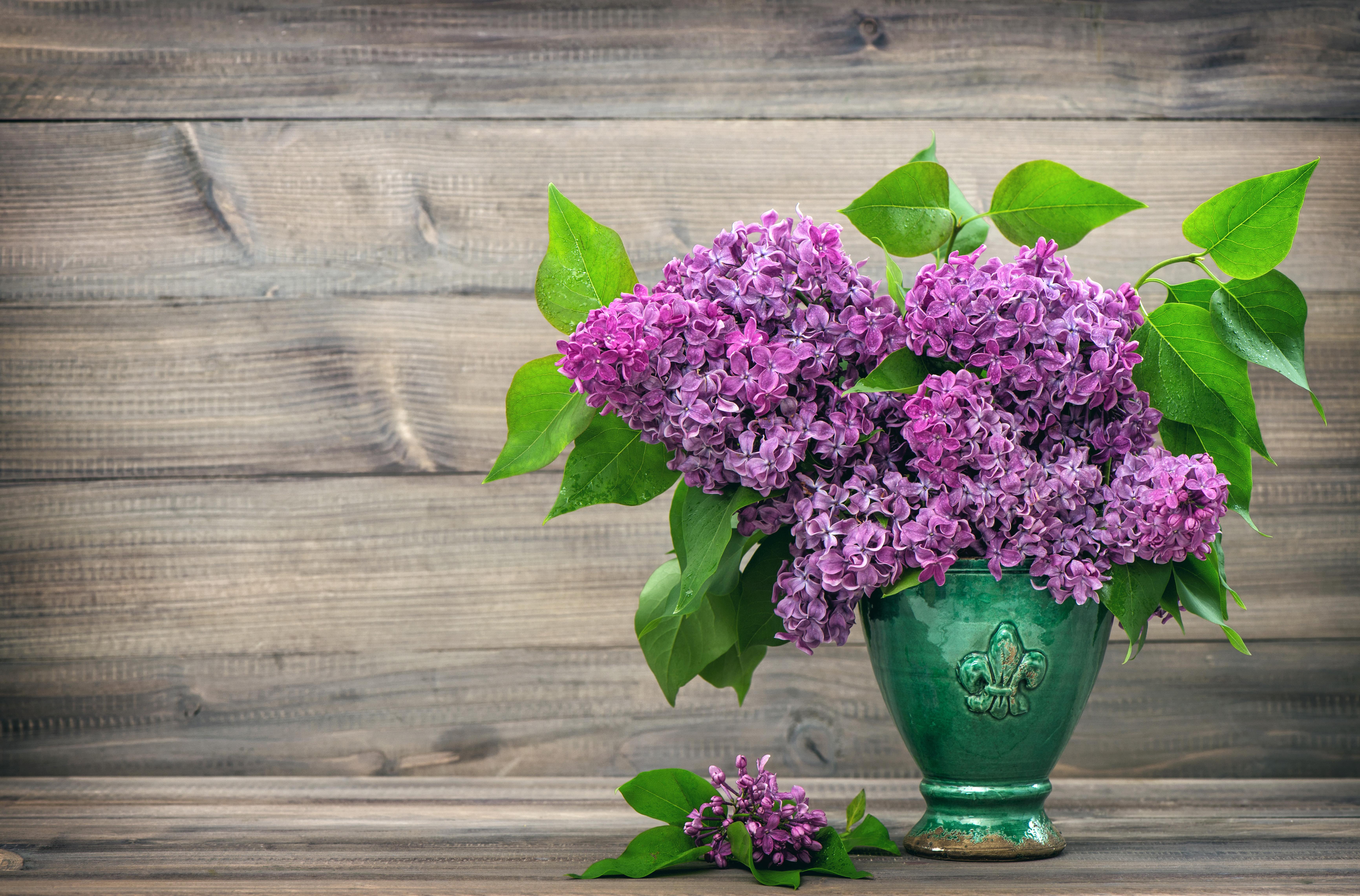 природа цветы ваза сирень  № 3063911  скачать