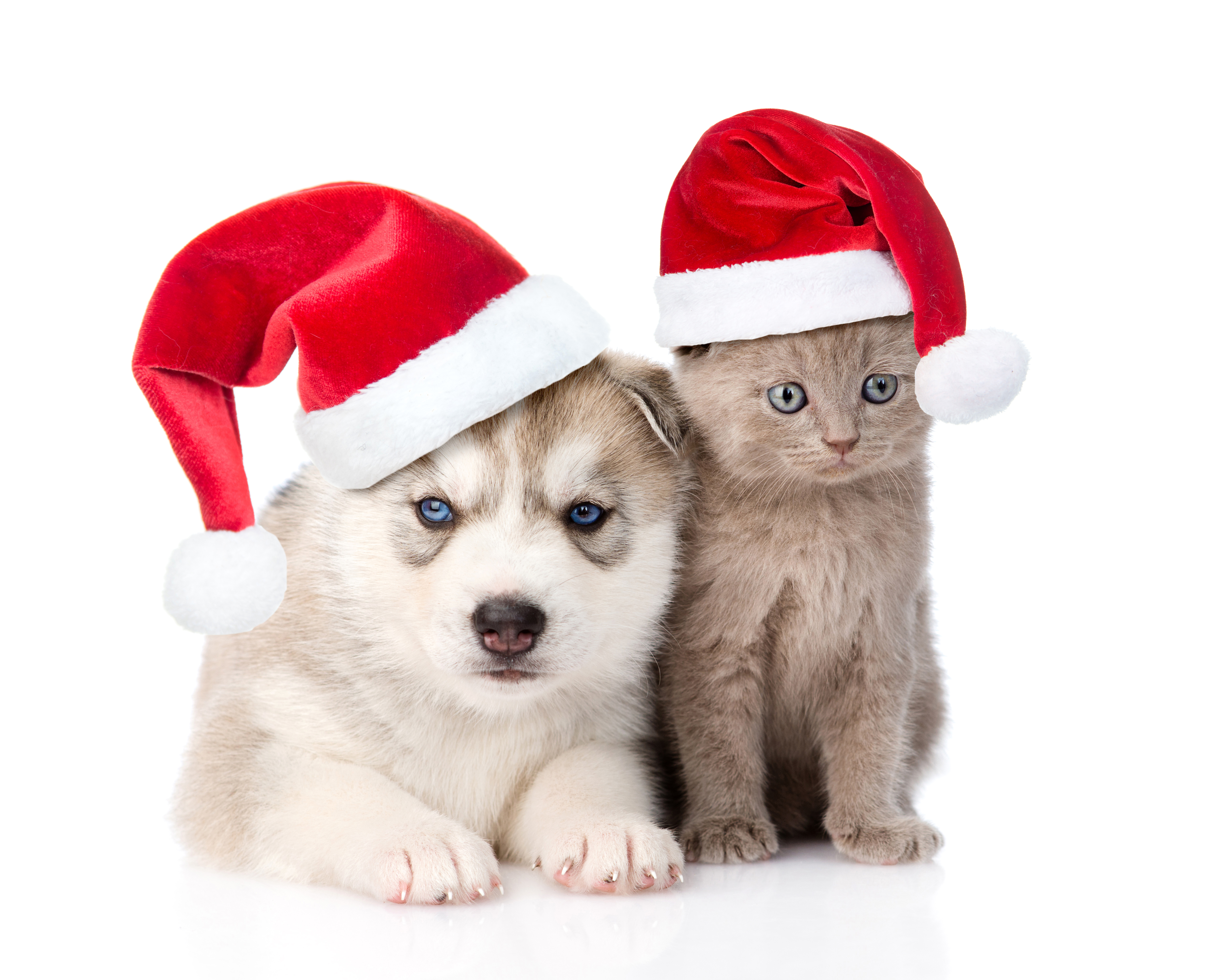 собачка в новогодней шапочке  № 1301942  скачать