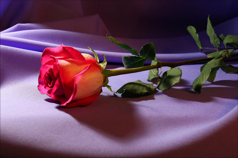 Самые красивые цветы хорошего качества