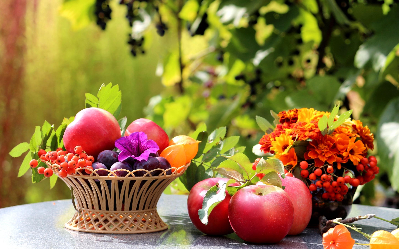 широкоформатные обои на рабочий стол высокого качества осенние цветы № 226172 загрузить