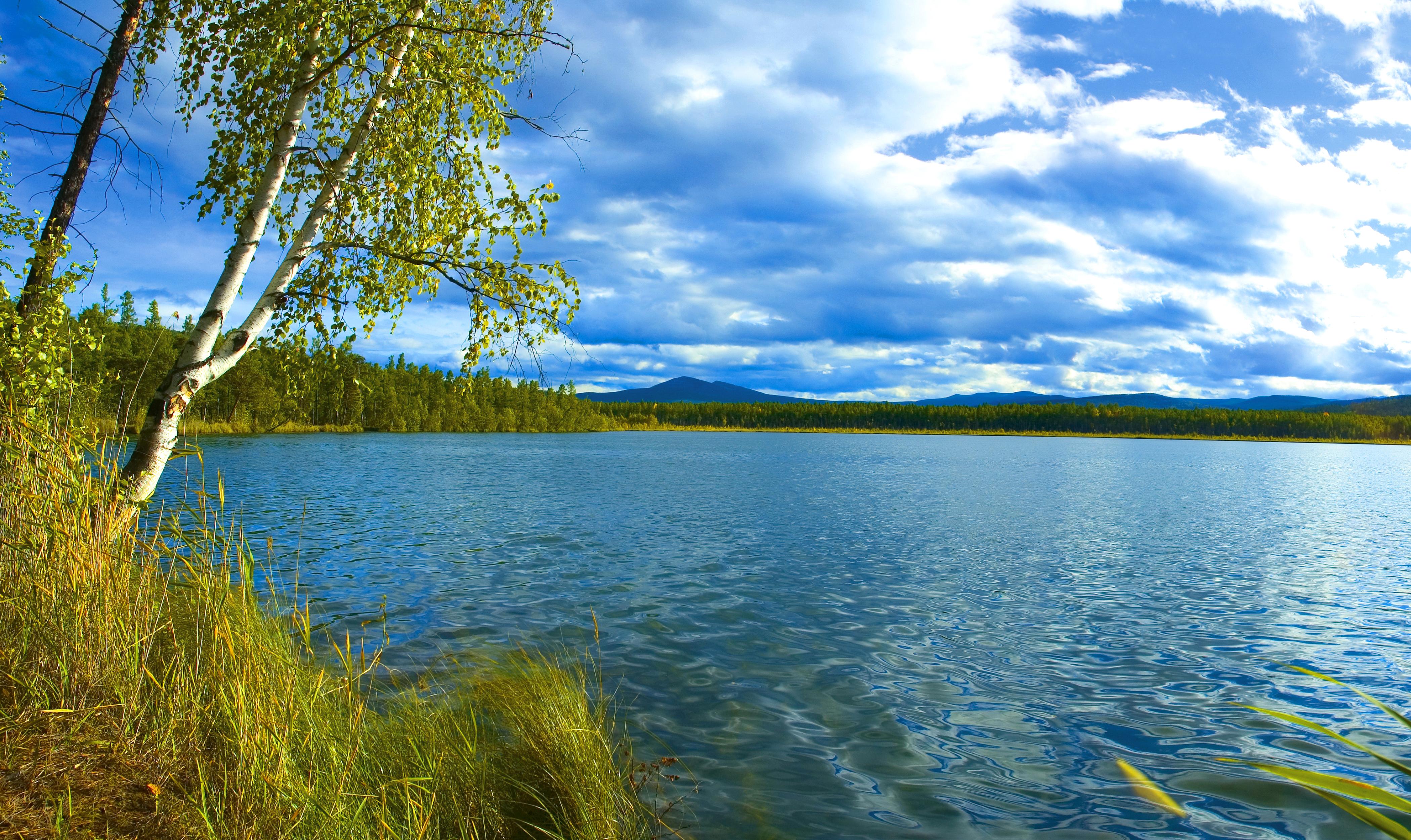 березы берег озеро  № 1195453 загрузить