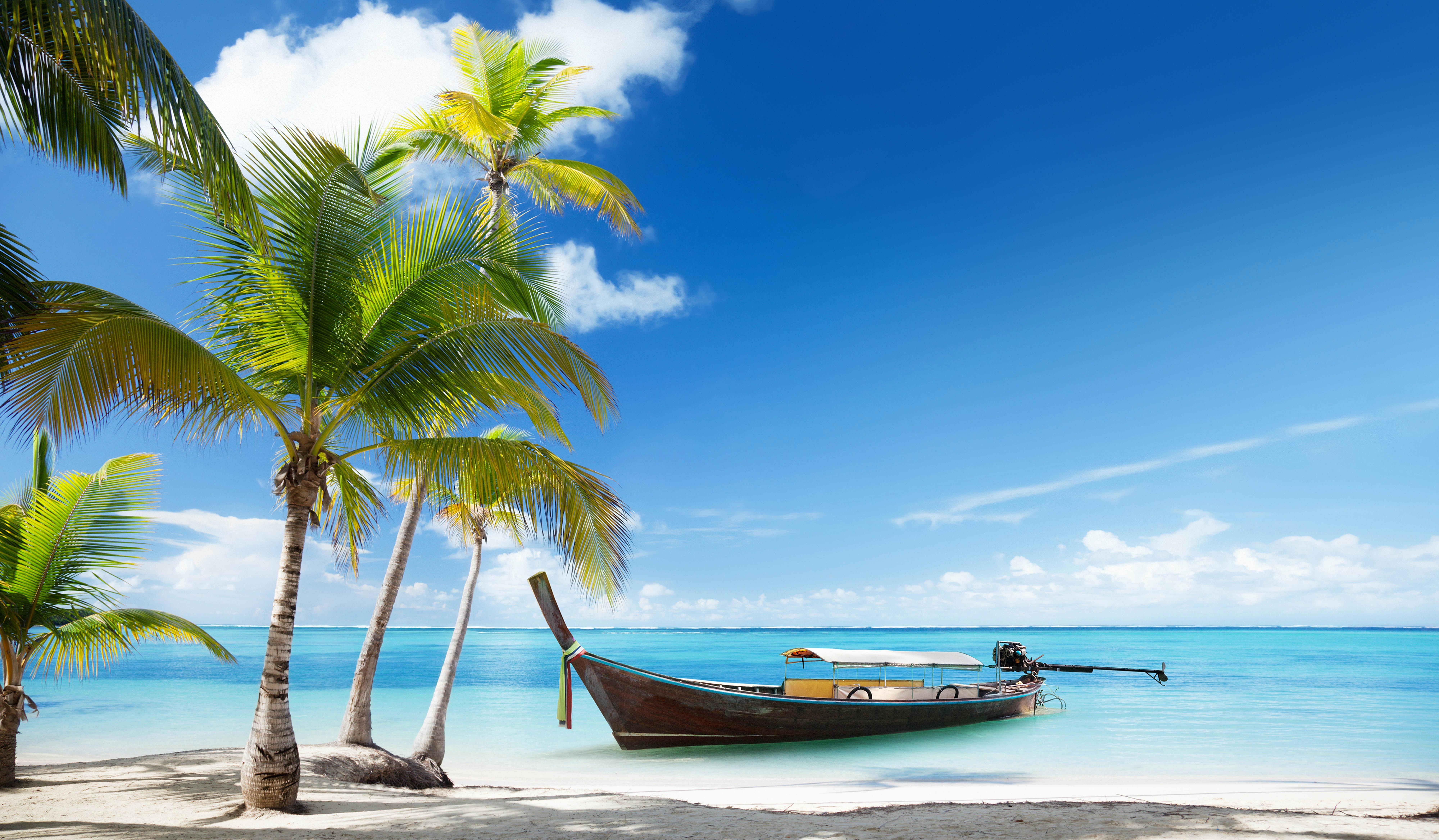 берег пальма море солнце пляж  № 3779804 без смс