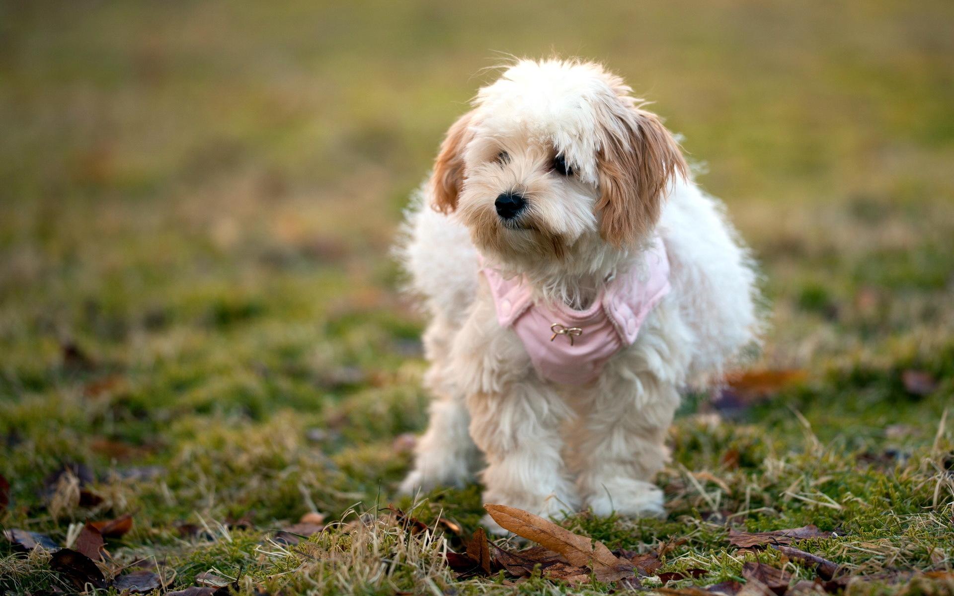фотообои собаки: