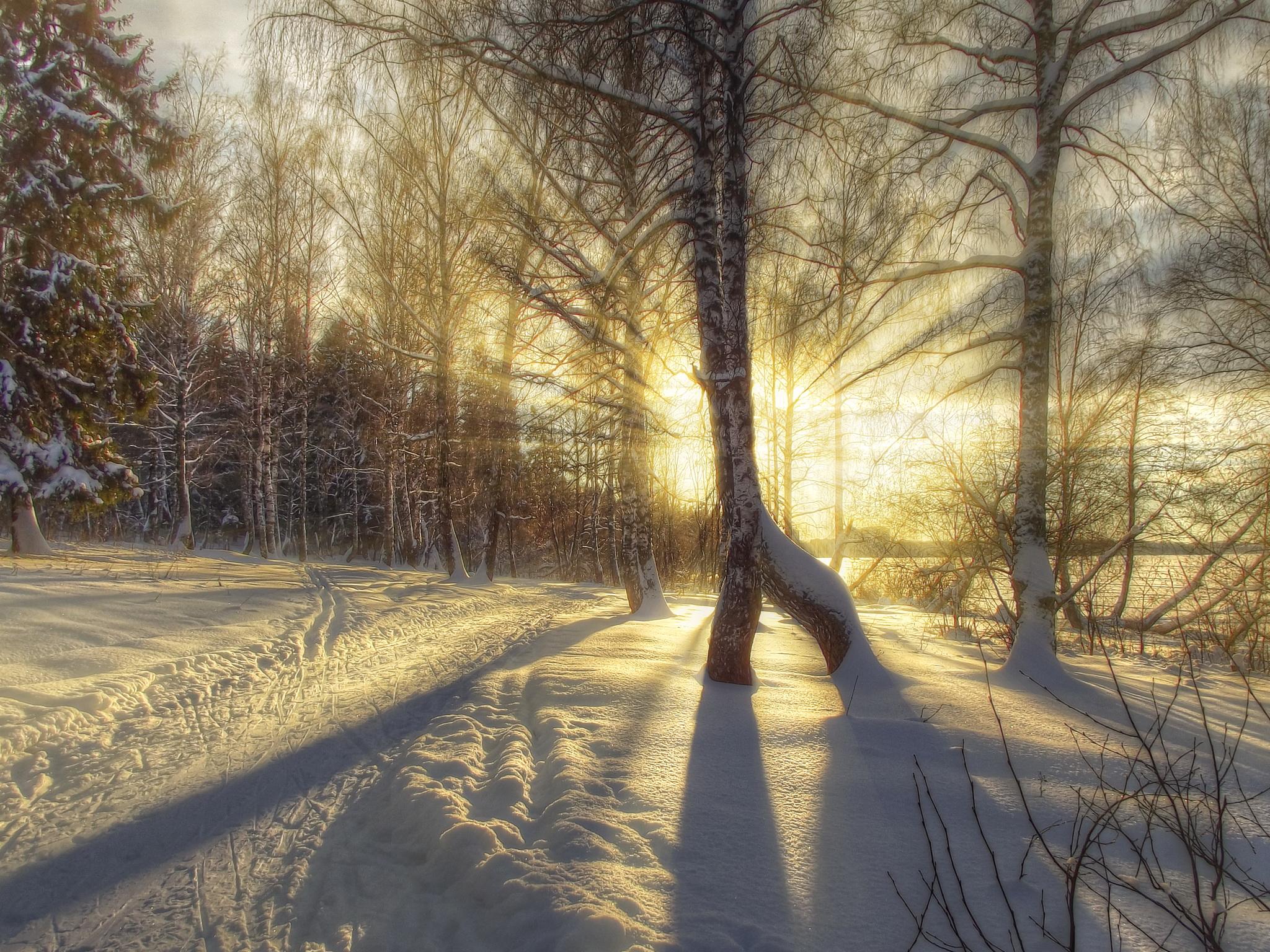 зимний солнечный лес  № 310419 бесплатно