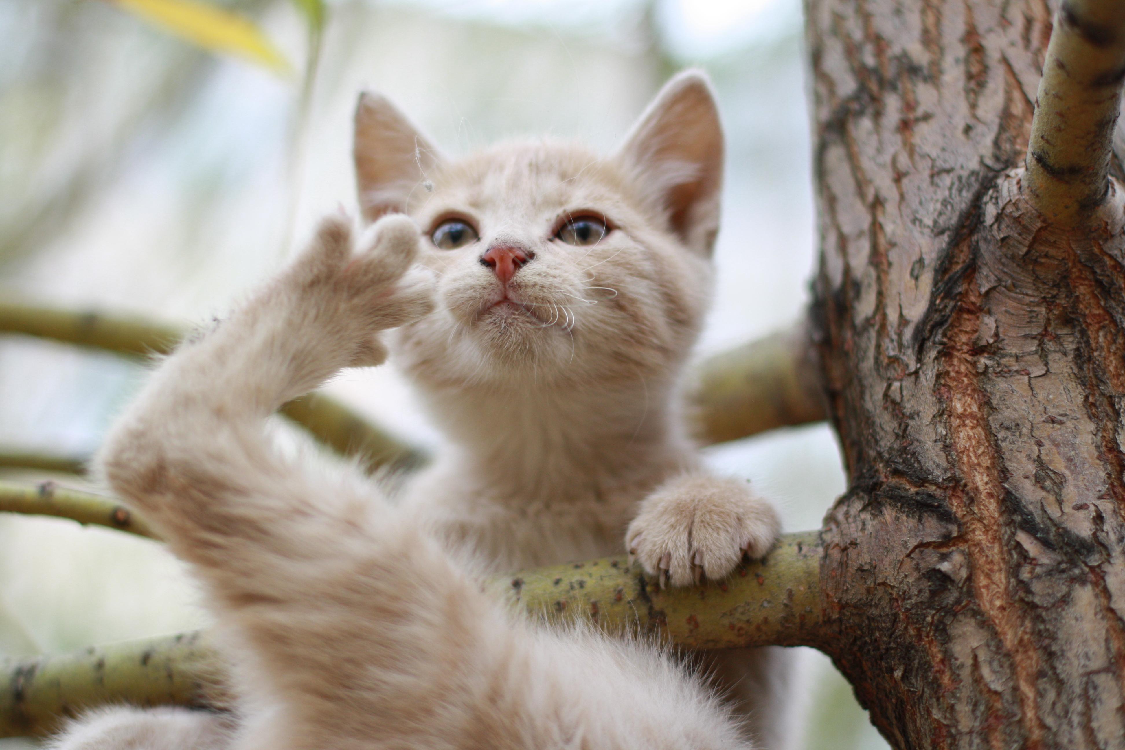 Кот на ветке  № 1118429 бесплатно