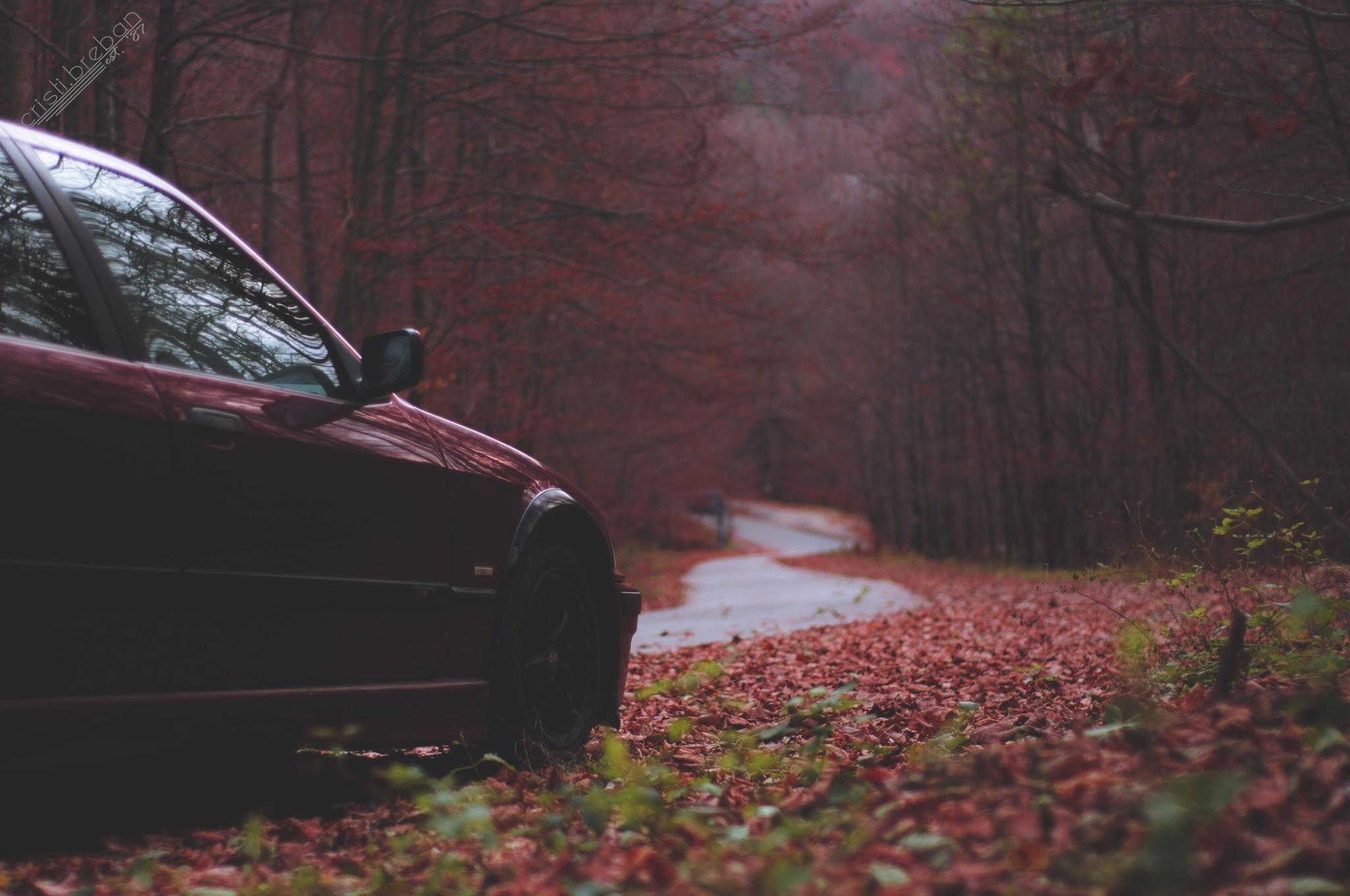 BMW M6 дорога осень  № 2445212 бесплатно