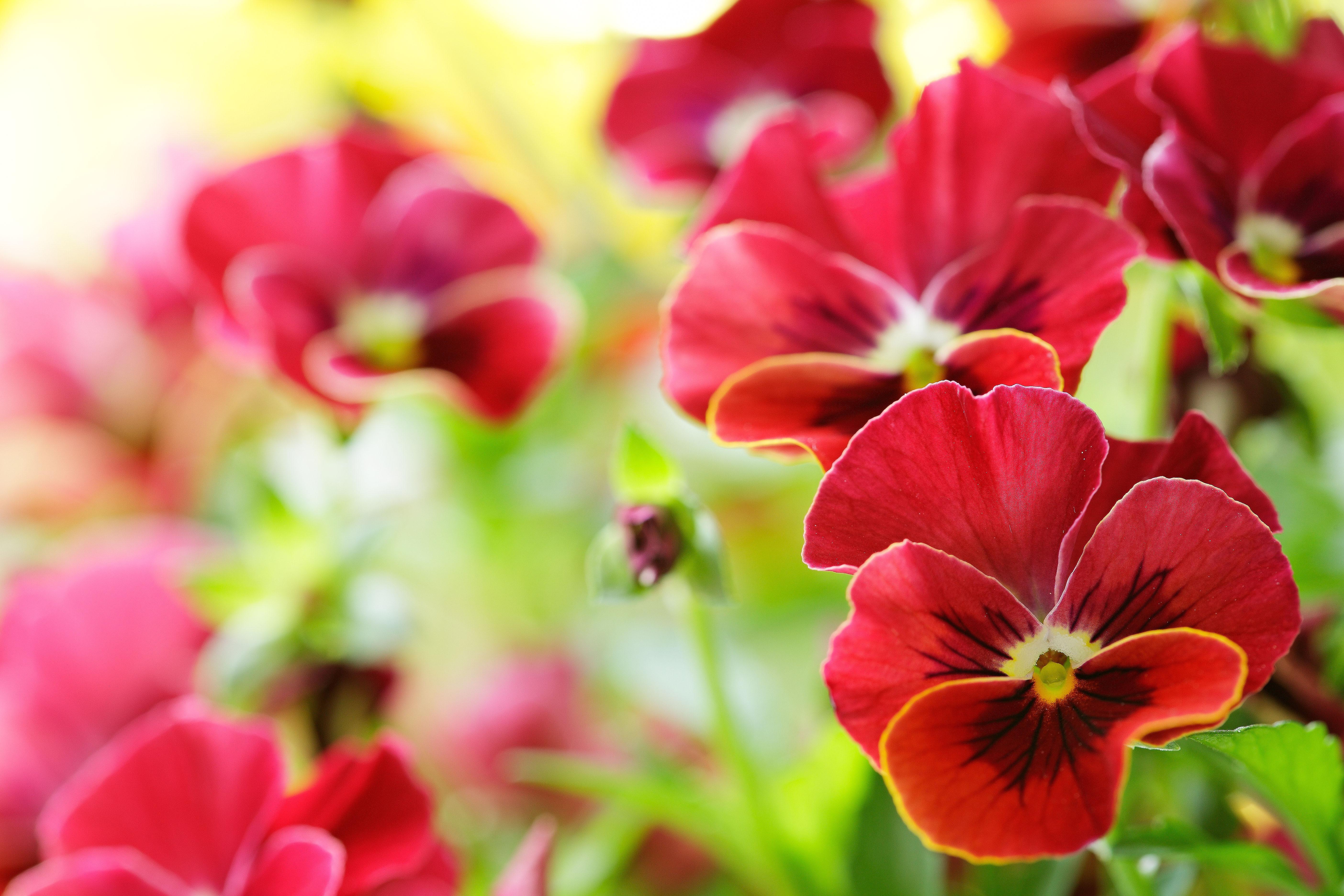 картинки цветы: