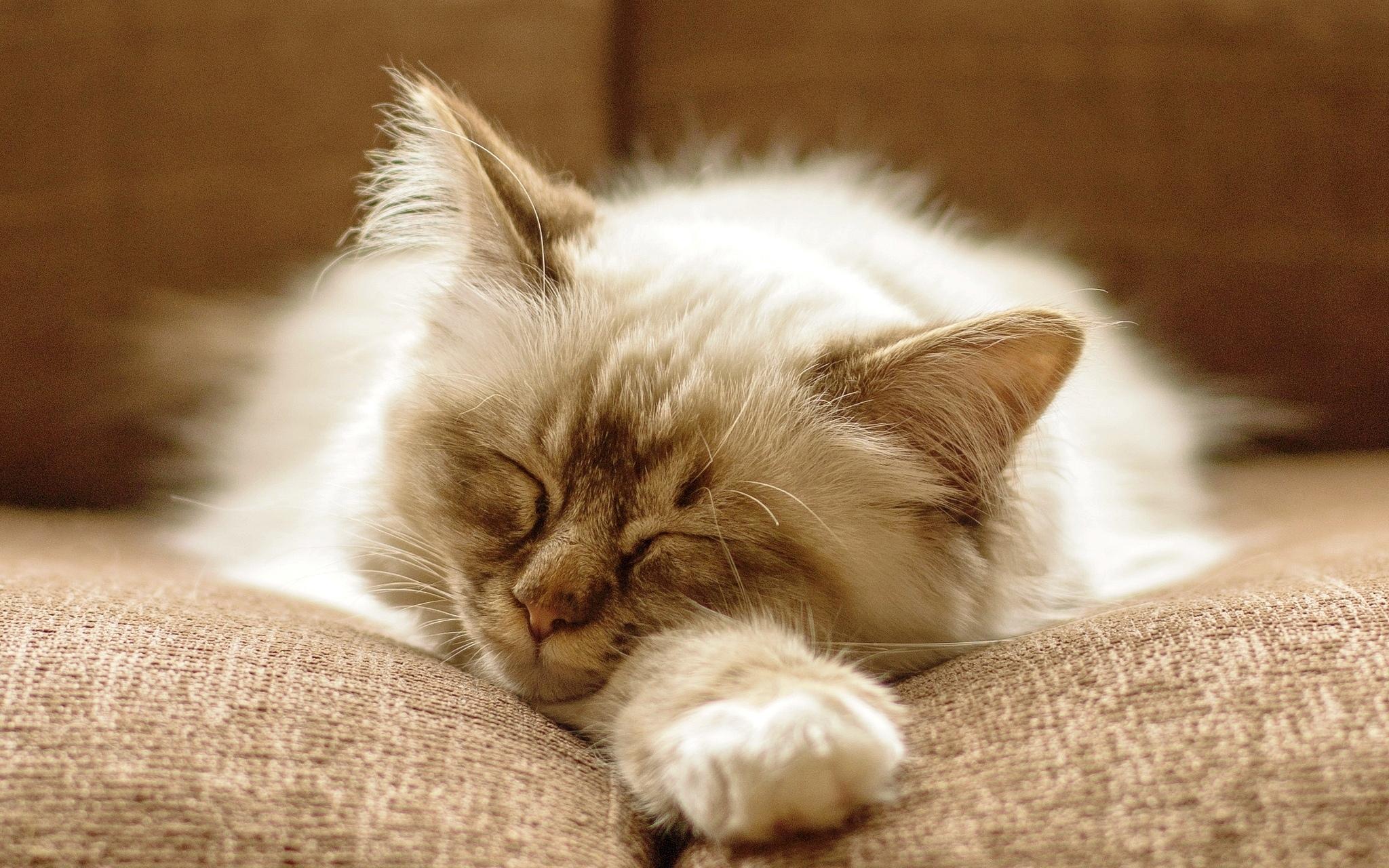 котята сон  № 3648399 бесплатно