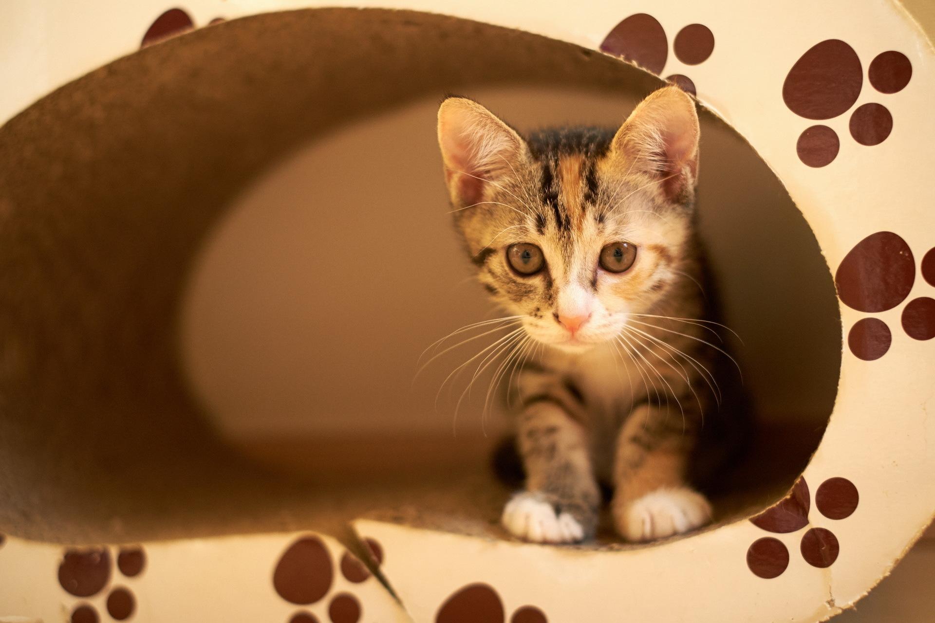 Кот с зеркалом  № 1689902 загрузить