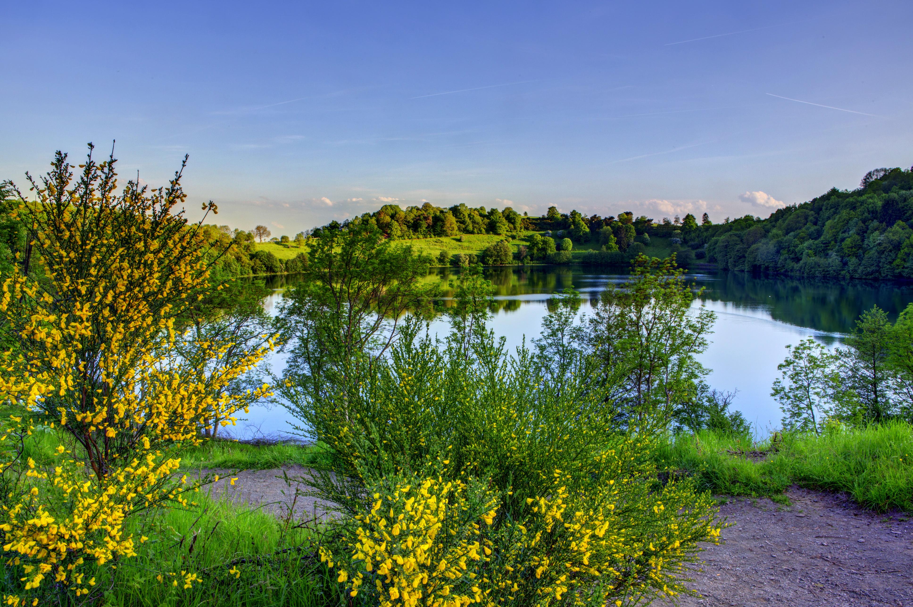 Берег озера в траве  № 2482622 без смс