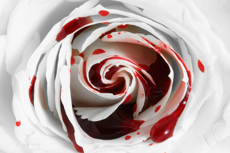 Замена грм на Роза для букета своими